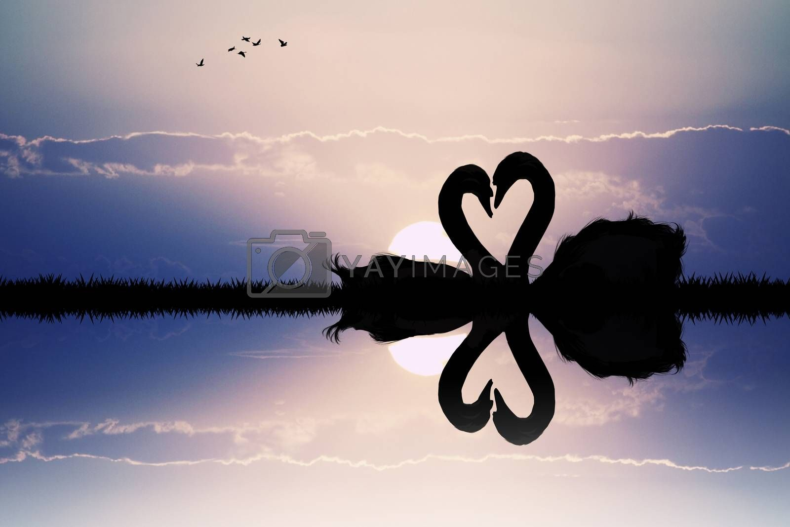 illustration of swans in love at sunset
