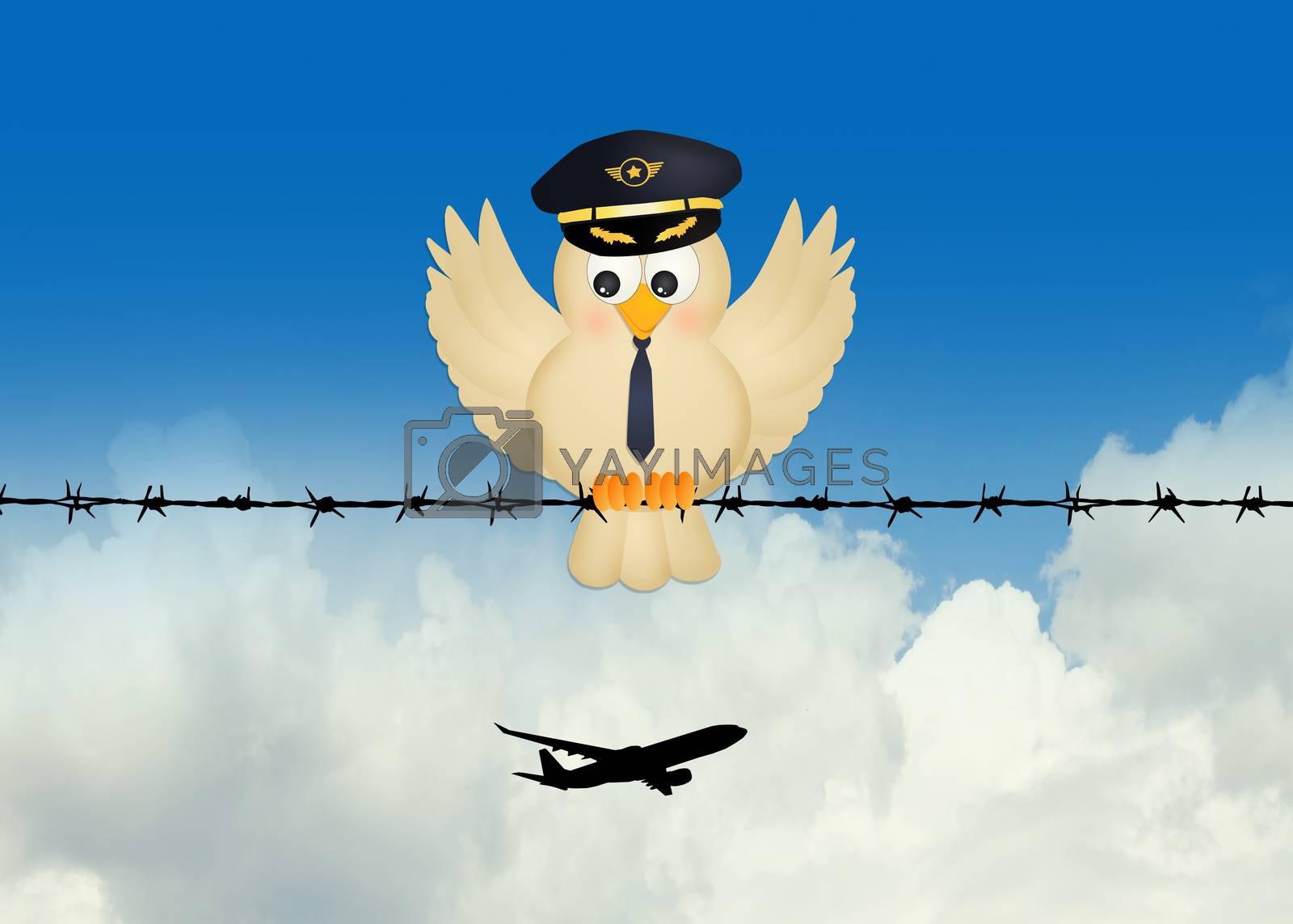 illustration of pilot bird on wire
