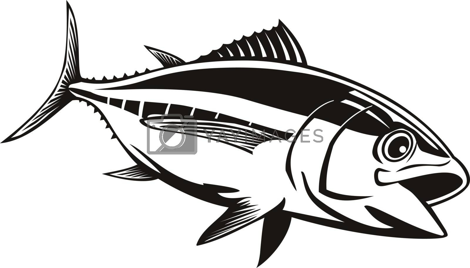 Retro style illustration of a bigeye tuna thunnus obesus, a species of true tuna of genus thunnus, belonging to the mackerel family scombridae swimming on isolated background done in black and white.