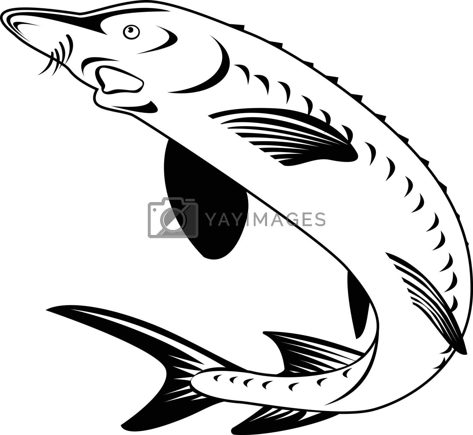 Retro woodcut style illustration of an Atlantic sturgeon Acipenser oxyrinchus oxyrinchus, a member of the family Acipenseridae, swimming up done in black and white.