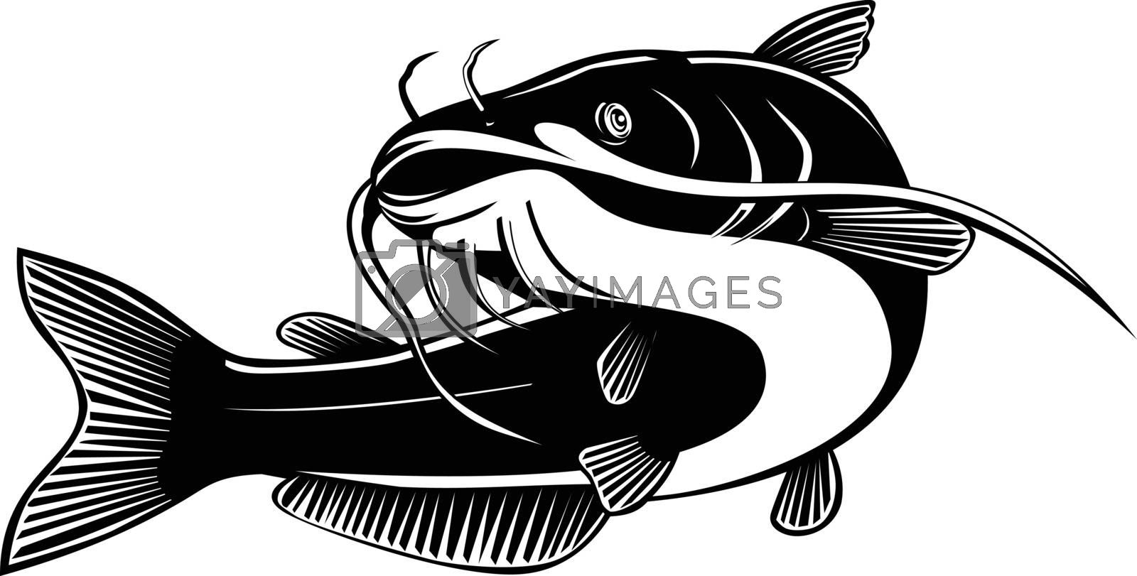 Retro woodcut style illustration of a blue catfish Ictalurus furcatus, largest species of North American catfish, swimming up on isolated background done in black and white.