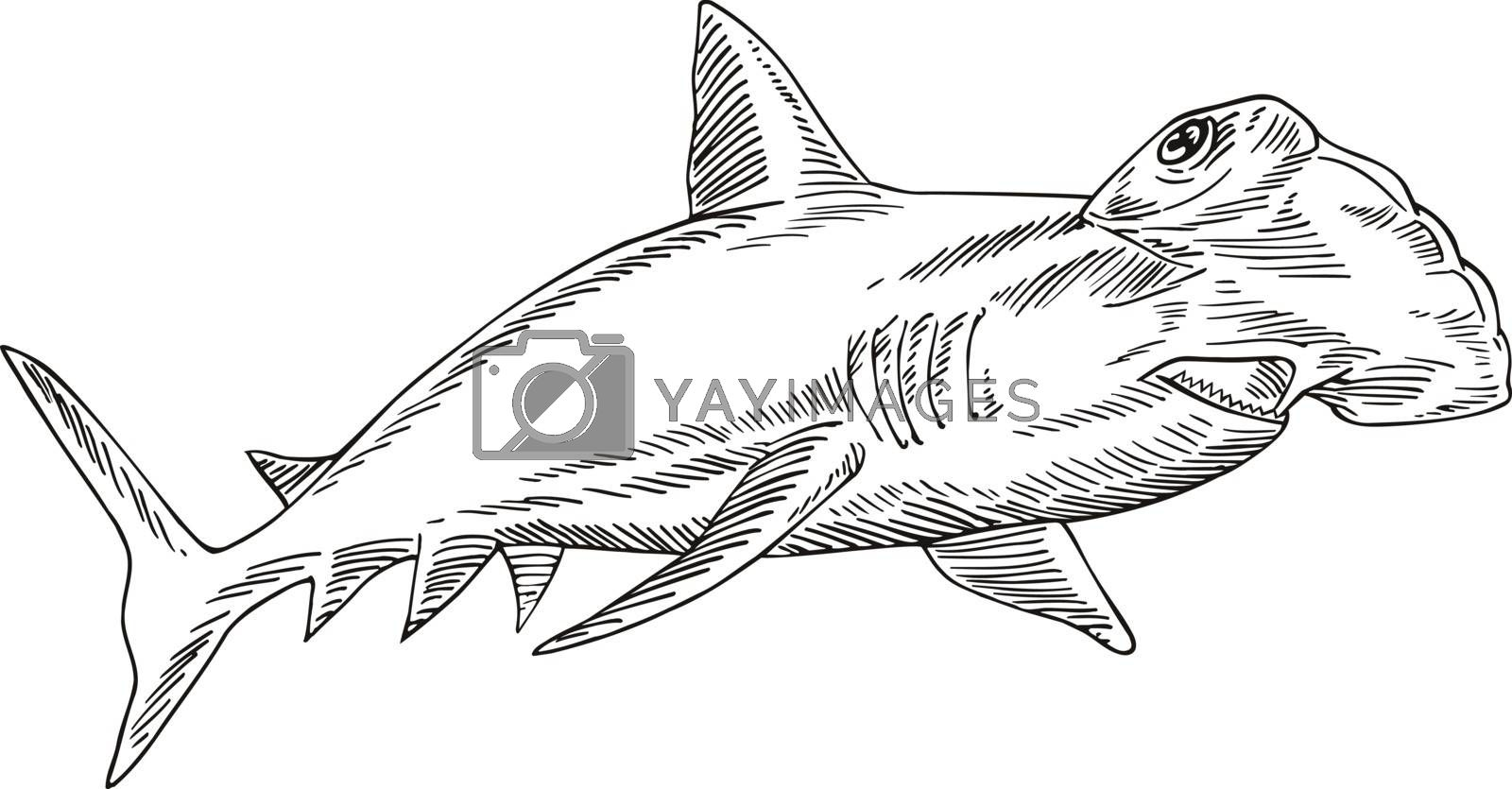 Etching style illustration of a  great hammerhead Sphyrna mokarran, the largest species of hammerhead shark to the family Sphyrnidae done on scraperboard scratchboard style on isolated background.