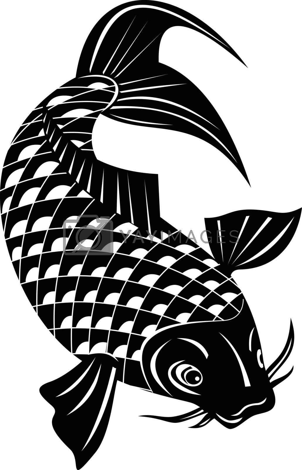 Retro woodcut style illustration of a koi, jinli or nishikigoi brocaded carp, a colored variety of the Amur carp Cyprinus rubrofuscus swimming down on isolated background done in black and white.