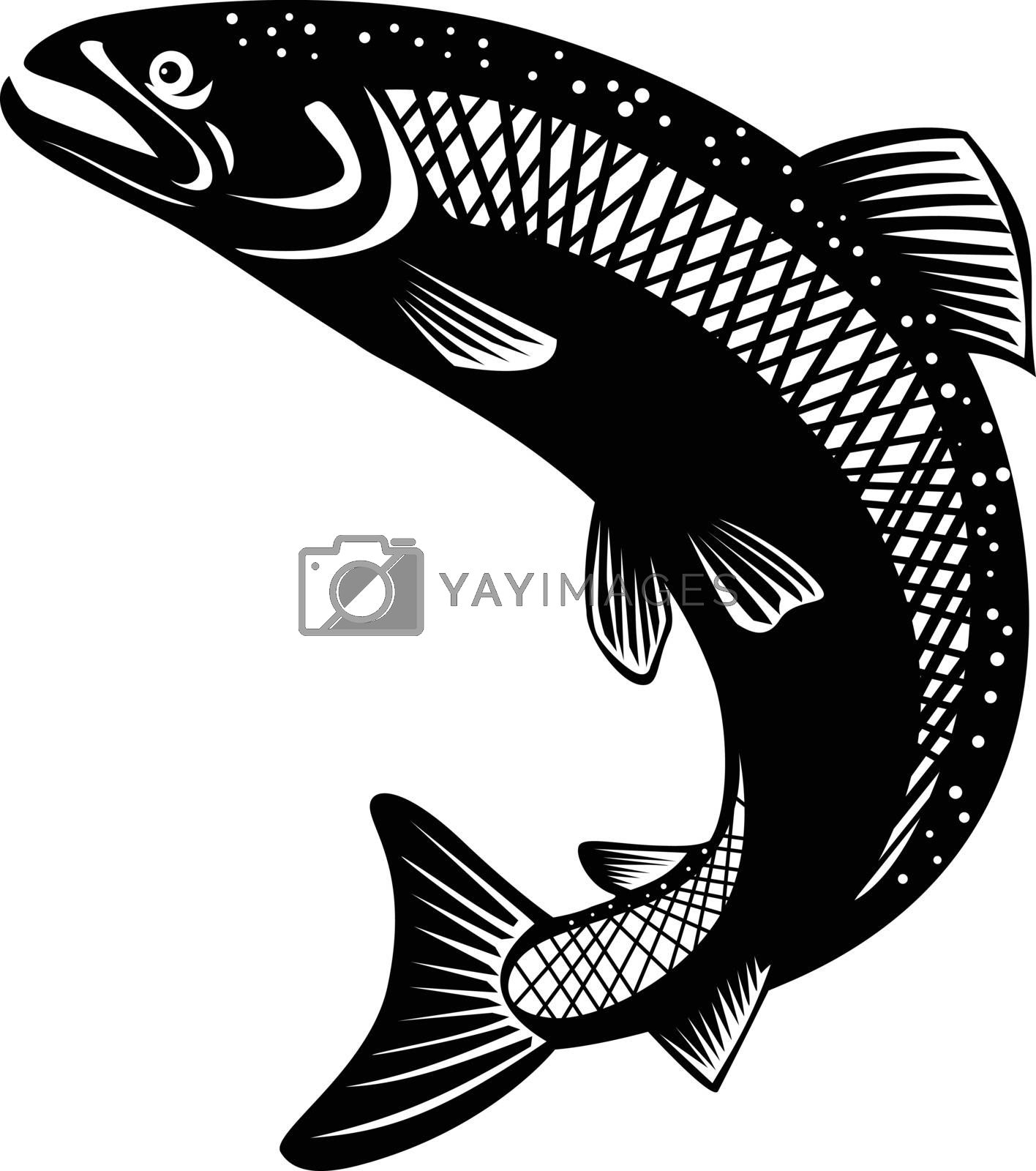 Retro woodcut style illustration of rainbow trout, Oncorhynchus mykiss, steelhead, Columbia River redband trout, coastal rainbow trout, a species of salmonid on isolated background in black and white.