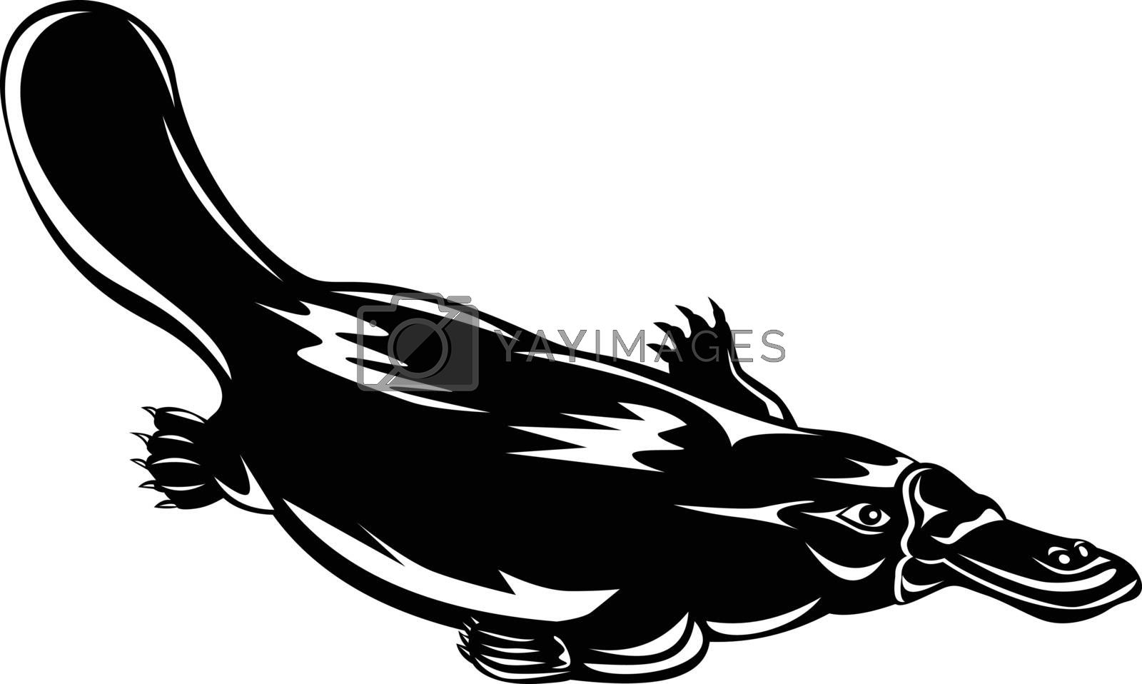 Retro woodcut style illustration of a duck-billed platypus Ornithorhynchus anatinus, a semiaquatic egg-laying mammal endemic to Australia swimming down isolated background done in black and white.