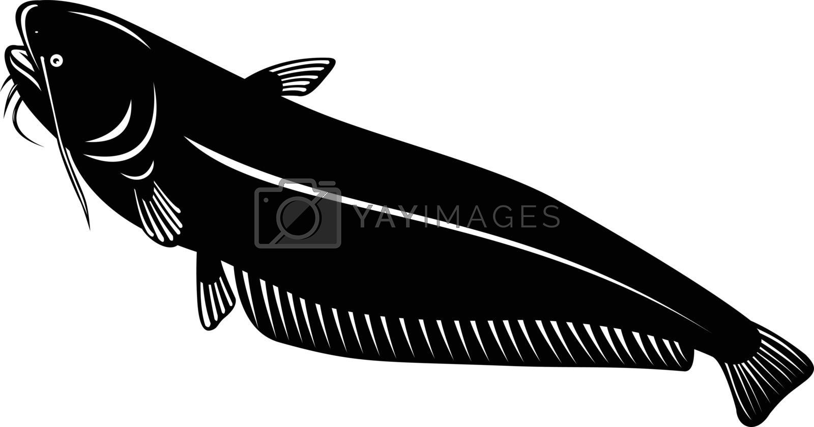 Retro woodcut style illustration of a wels catfish or sheatfish, a species of large catfish native to central, southern, and eastern Europe, going up on isolated background done in black and white.