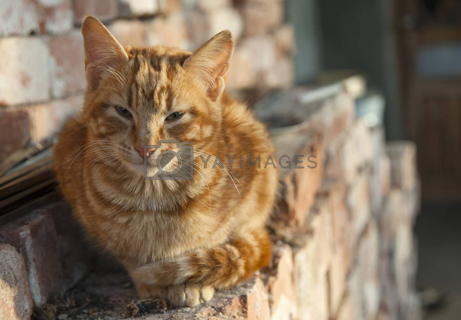 A red cat sits on a pile of red bricks.