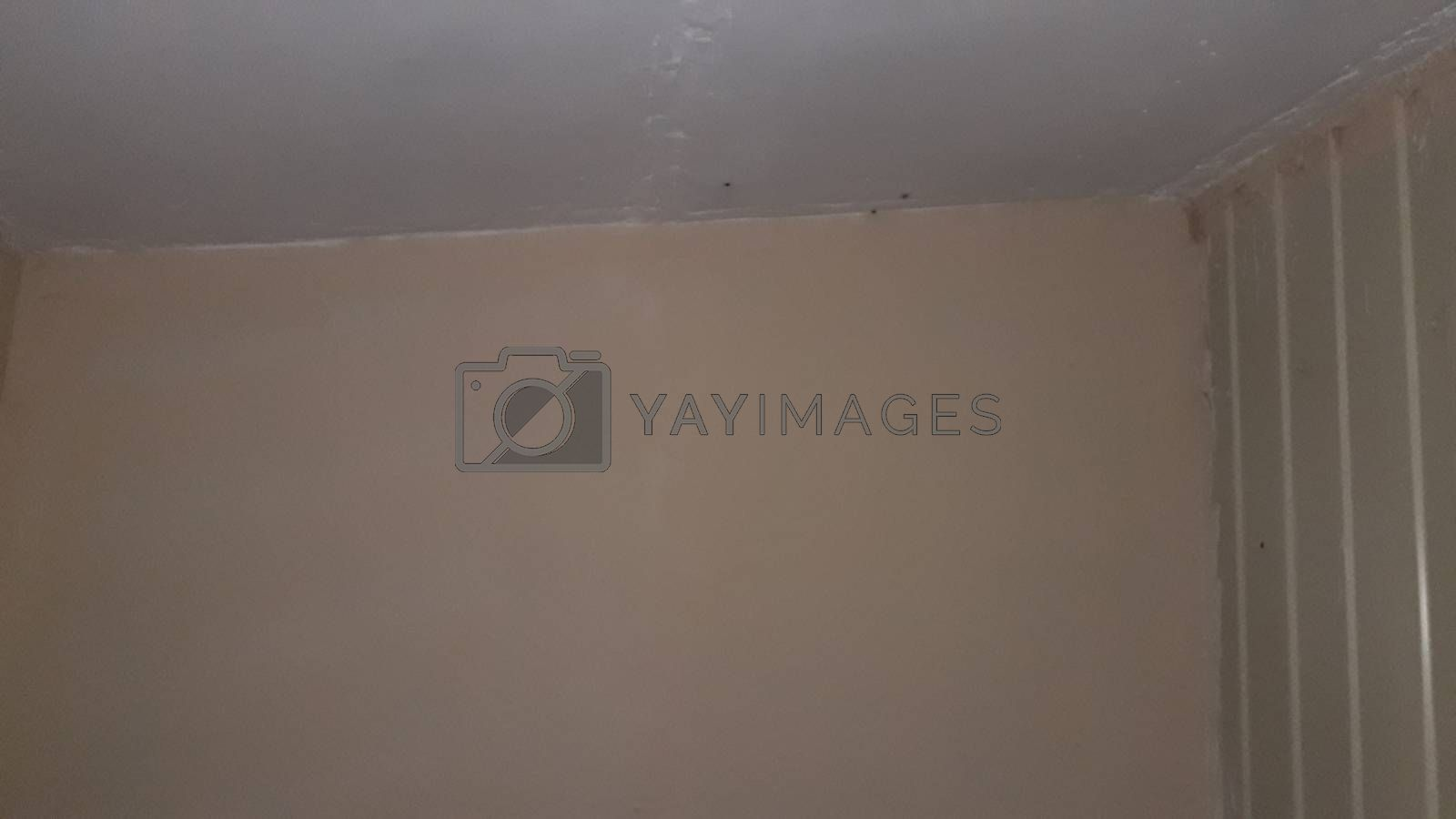 Technology of painting walls and ceilings of a the house with paint
