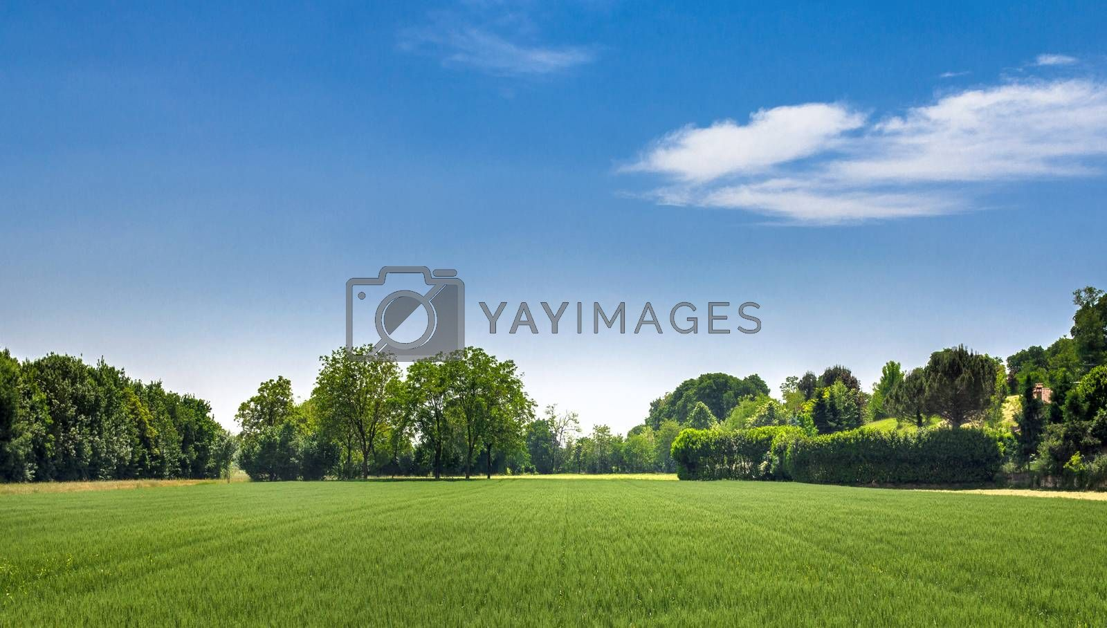 Countryside landscape. Italy. Beautiful typical countryside summer landscape.