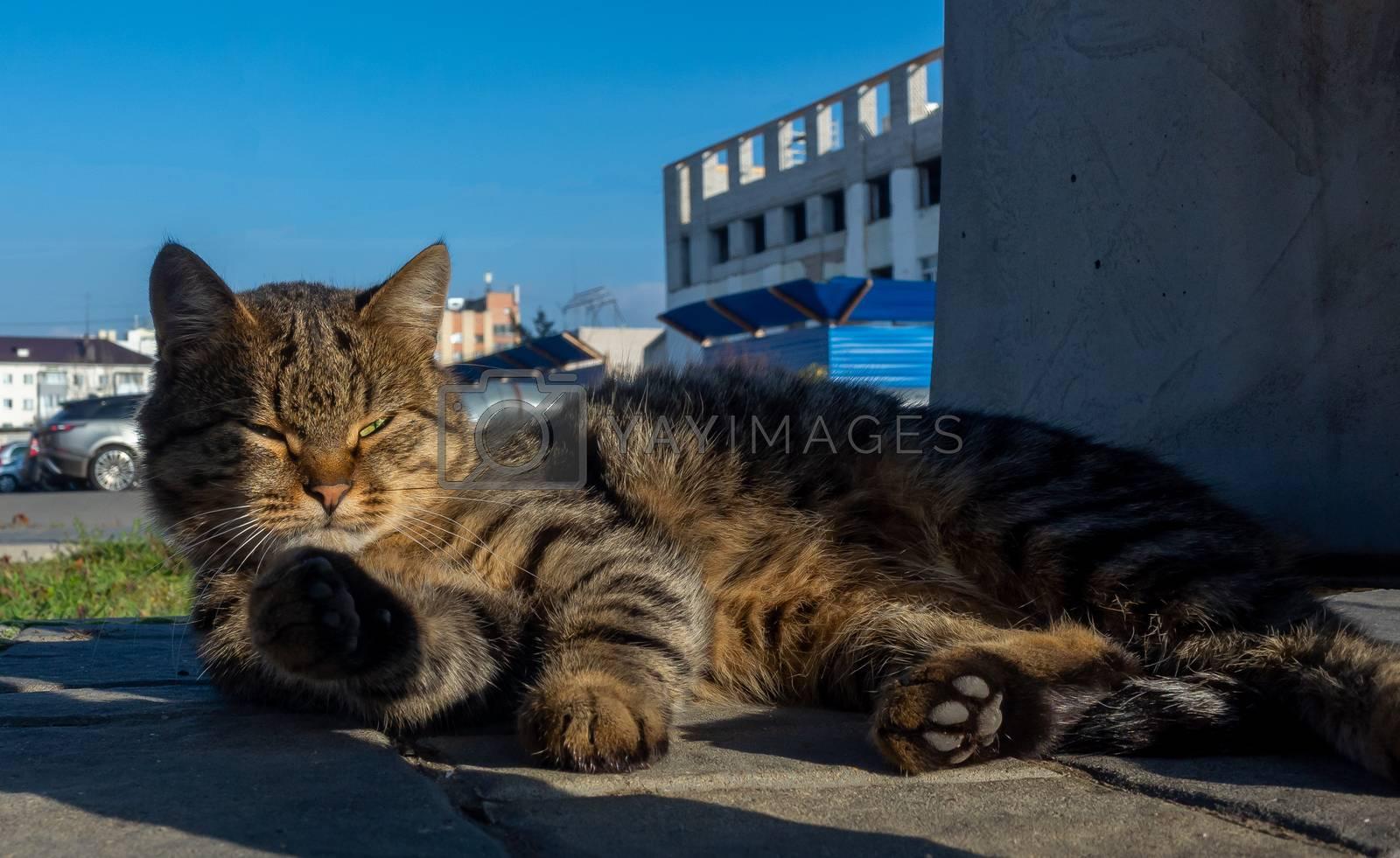 A yard cat sleeps in the warm autumn sun.