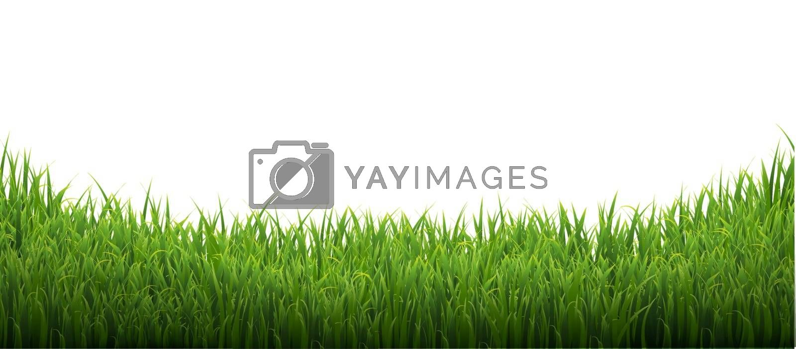 Green Grass Isolated White Background With Gradient Mesh, Vector Illustration