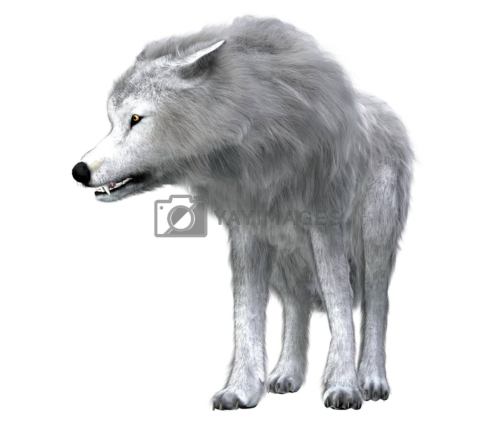 The predatory Dire Wolf prowled the forests of North and South America during the Pleistocene Period.