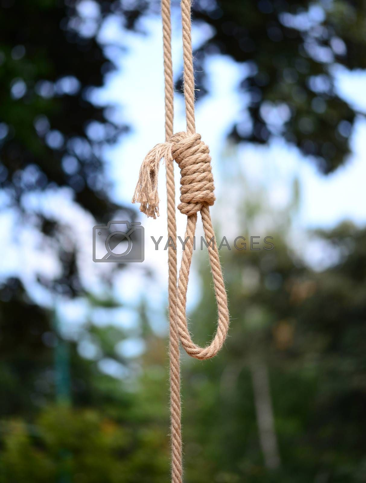Royalty free image of Gallows Hanging Rope by tony4urban