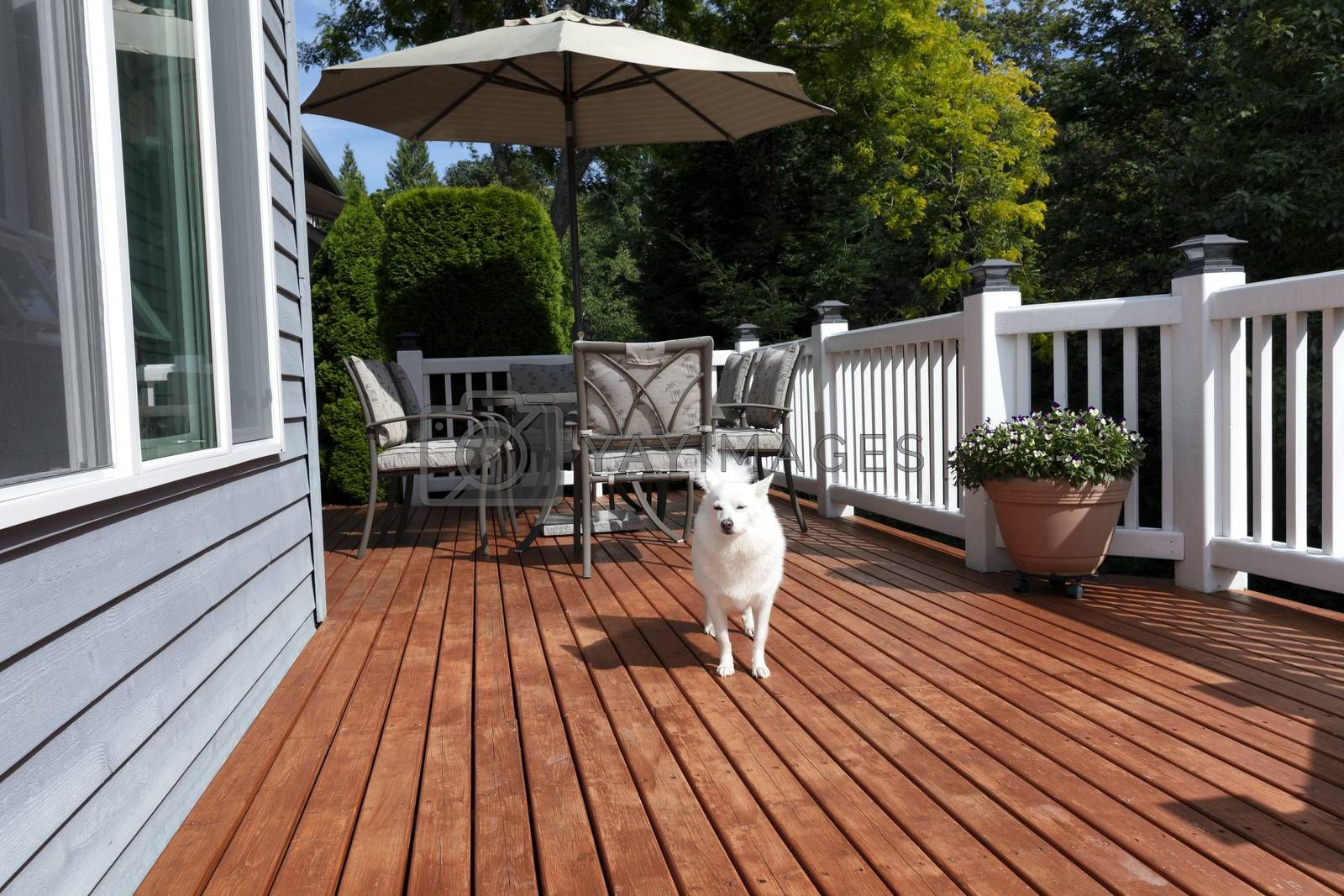 White family dog outdoors on home deck during summer time