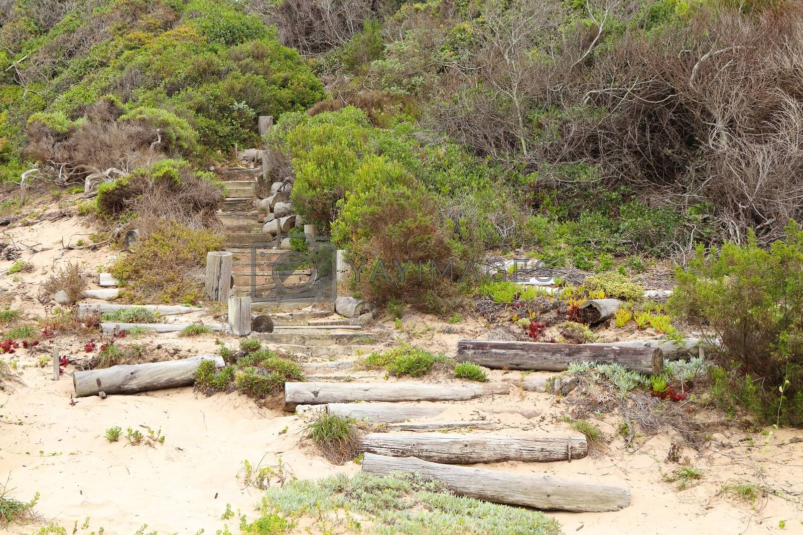 A coastal beach pathway staircase into the wilderness bushes, Plettenberg Bay, South Africa