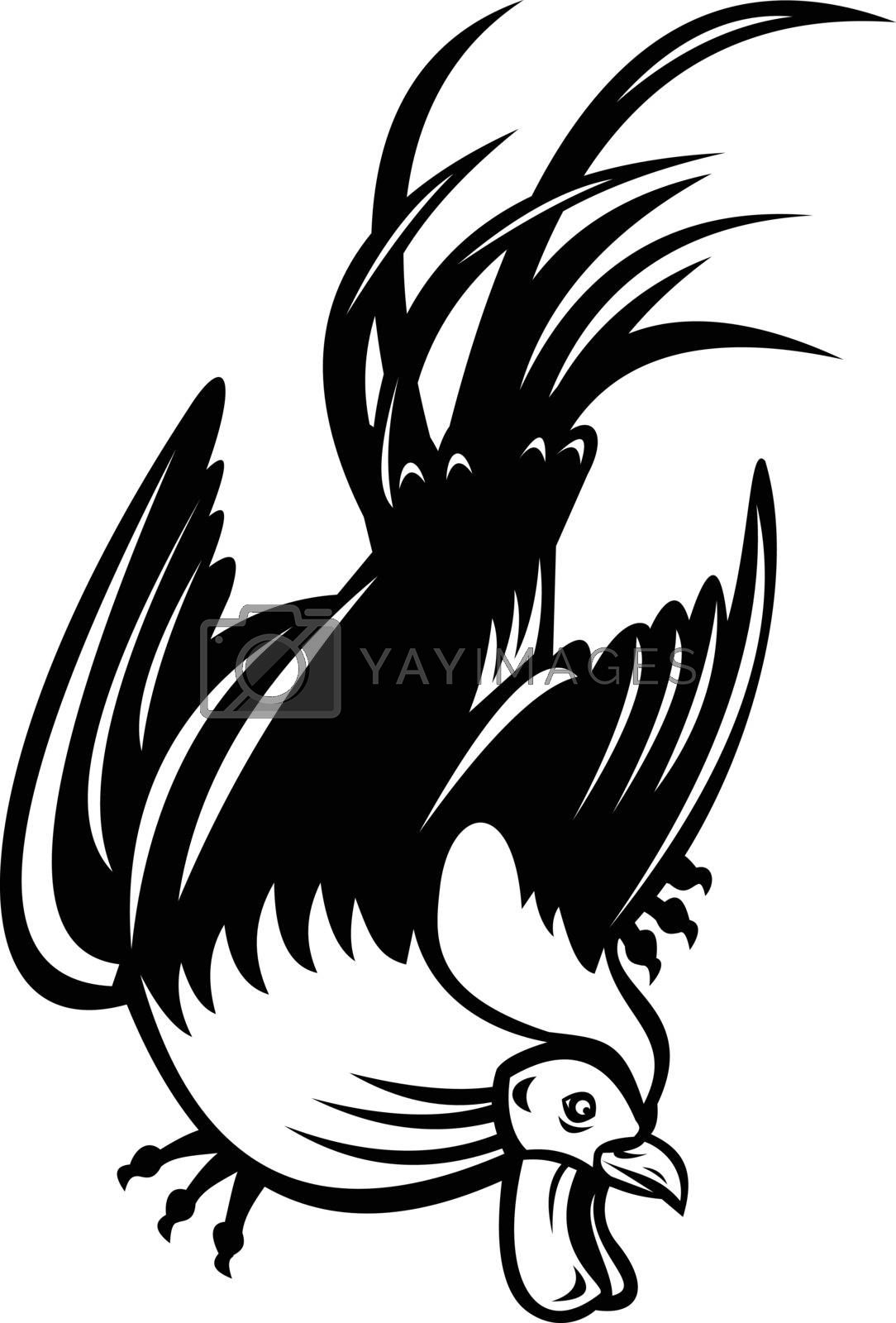 Retro style illustration of junglefowl, jungle fowl, cockerel or rooster in fighting stance viewed from low angle on isolated background in black and white.