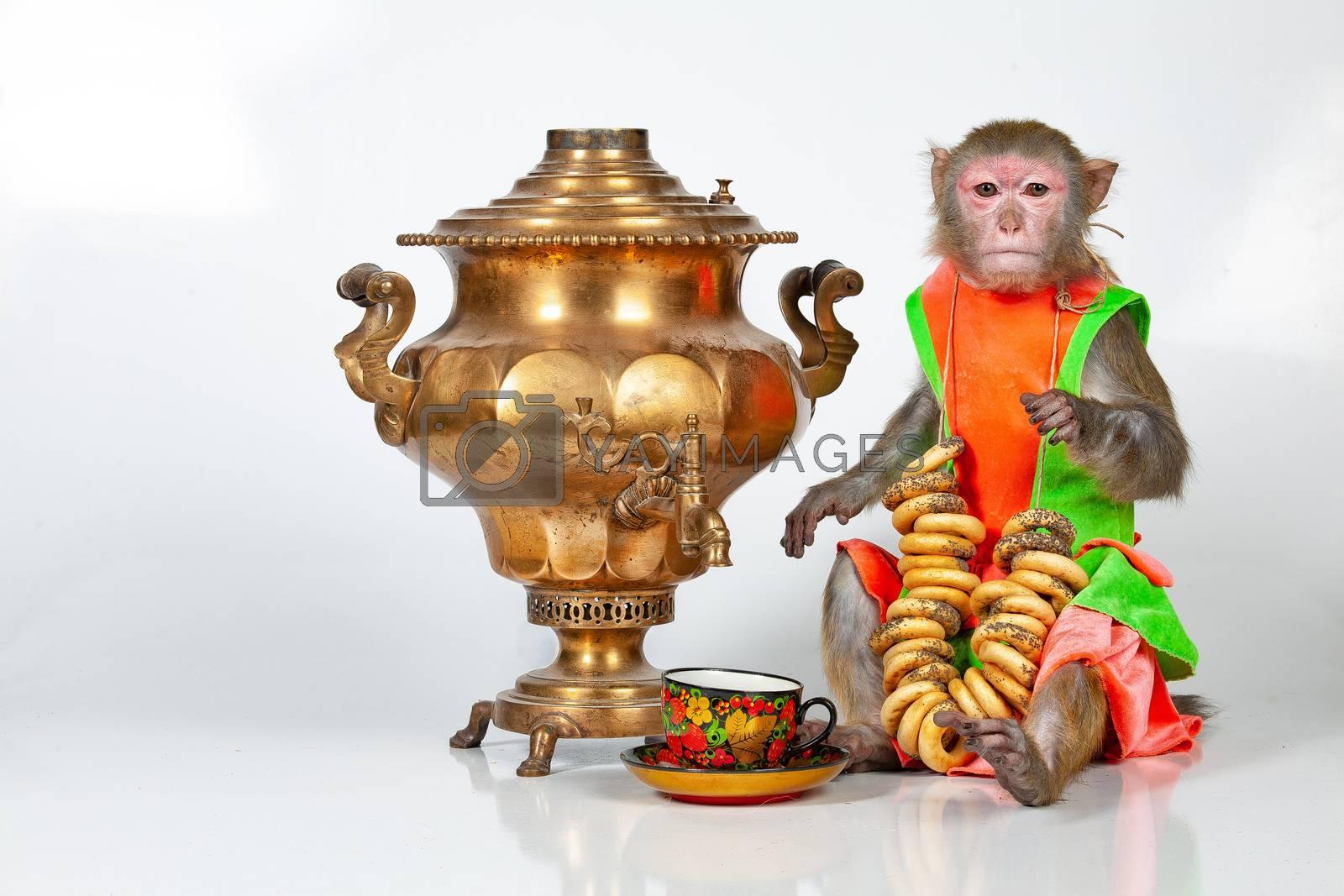 Monkey sitting near Russian water boiler