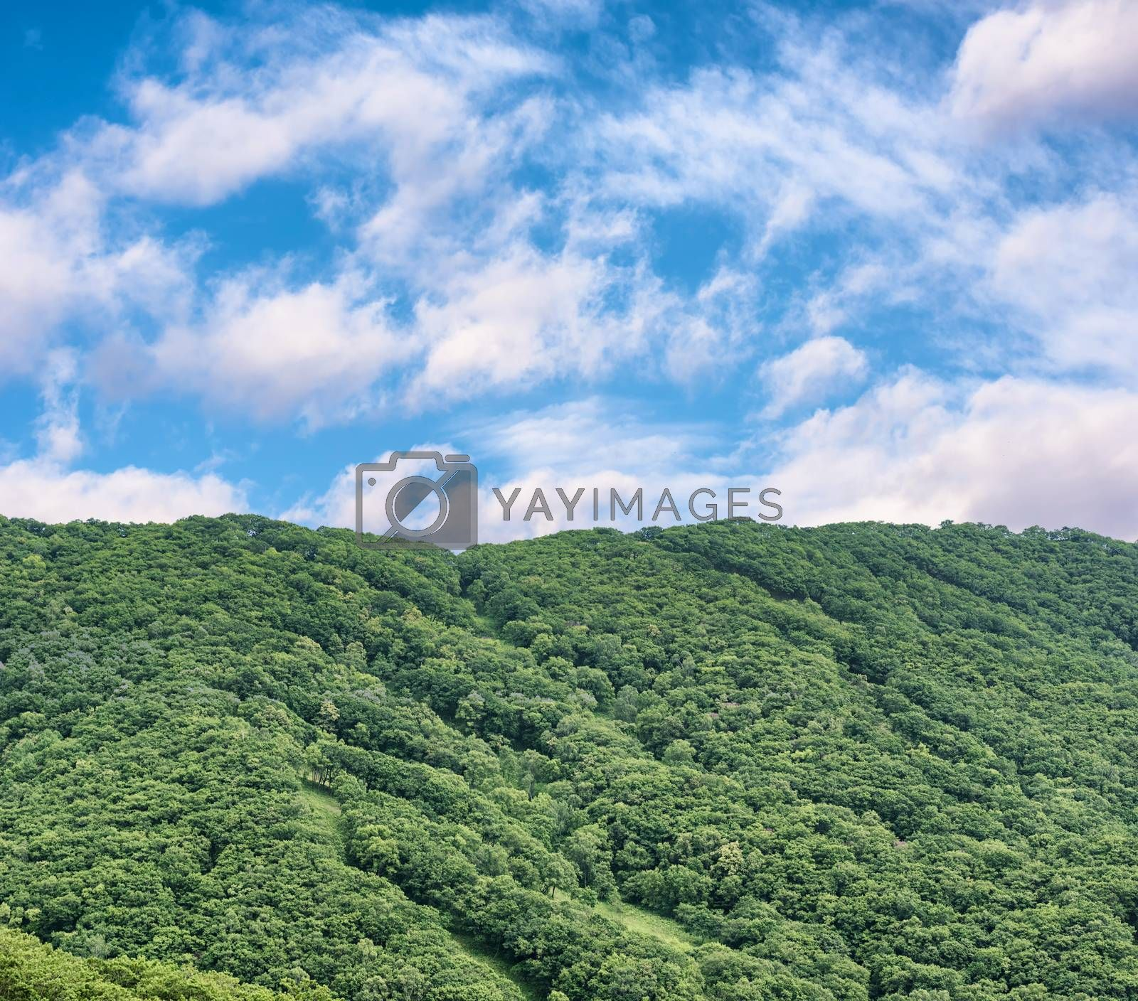 Royalty free image of Green mountains in summer by Visual-Content