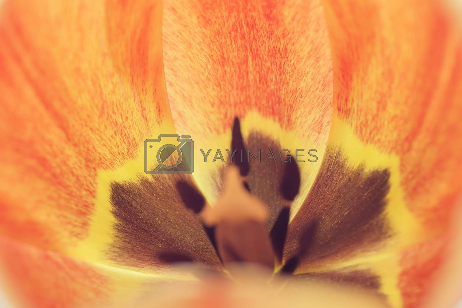 Background of flower petals. Soft blur in pastel colors. Close-up of flower petals