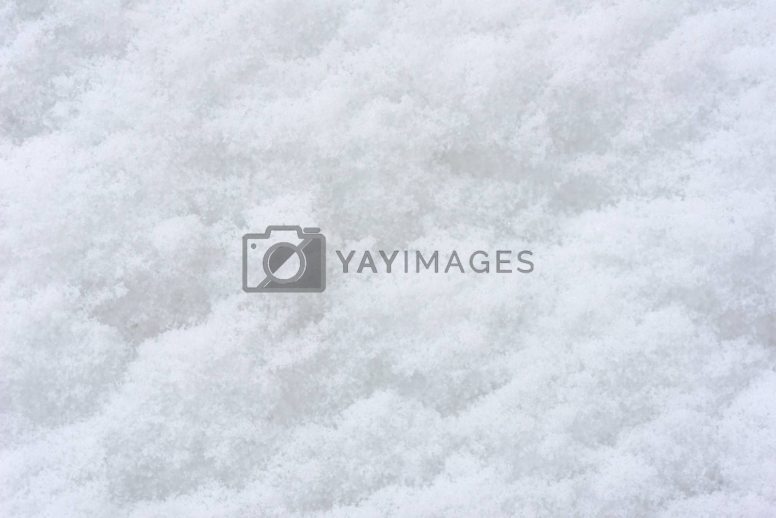 Snow background. Background of fresh snow texture