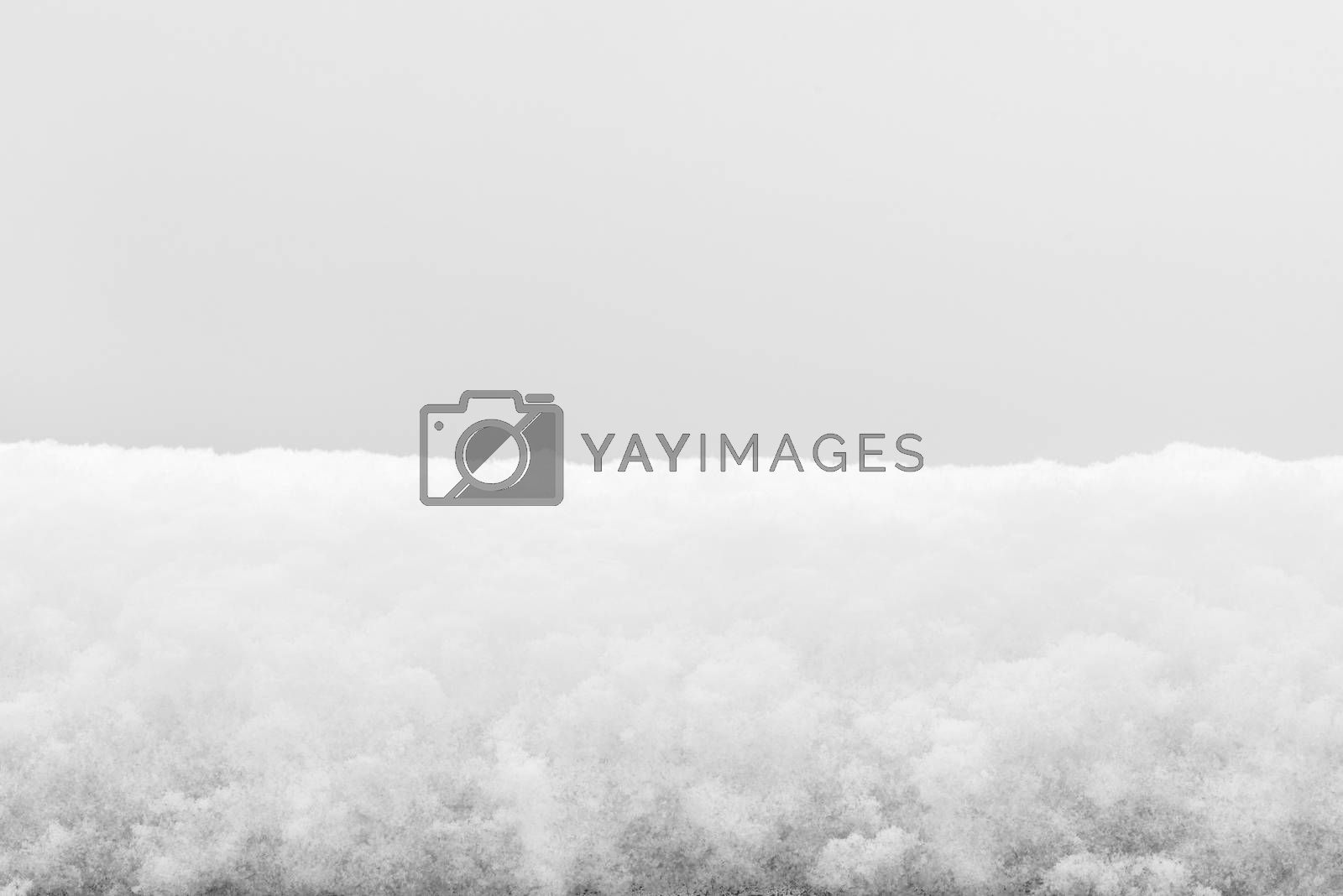 Snow texture background. Icy texture of snow