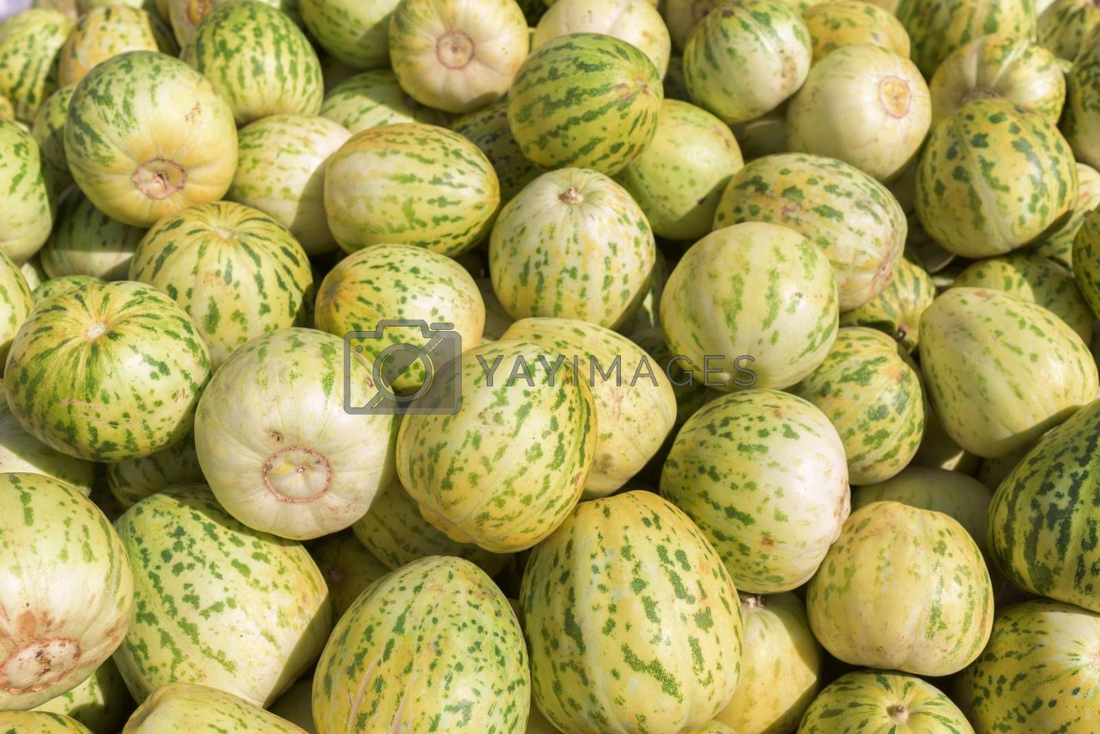 Bunch of small melons. Group of fresh ripe yellow sweet melons