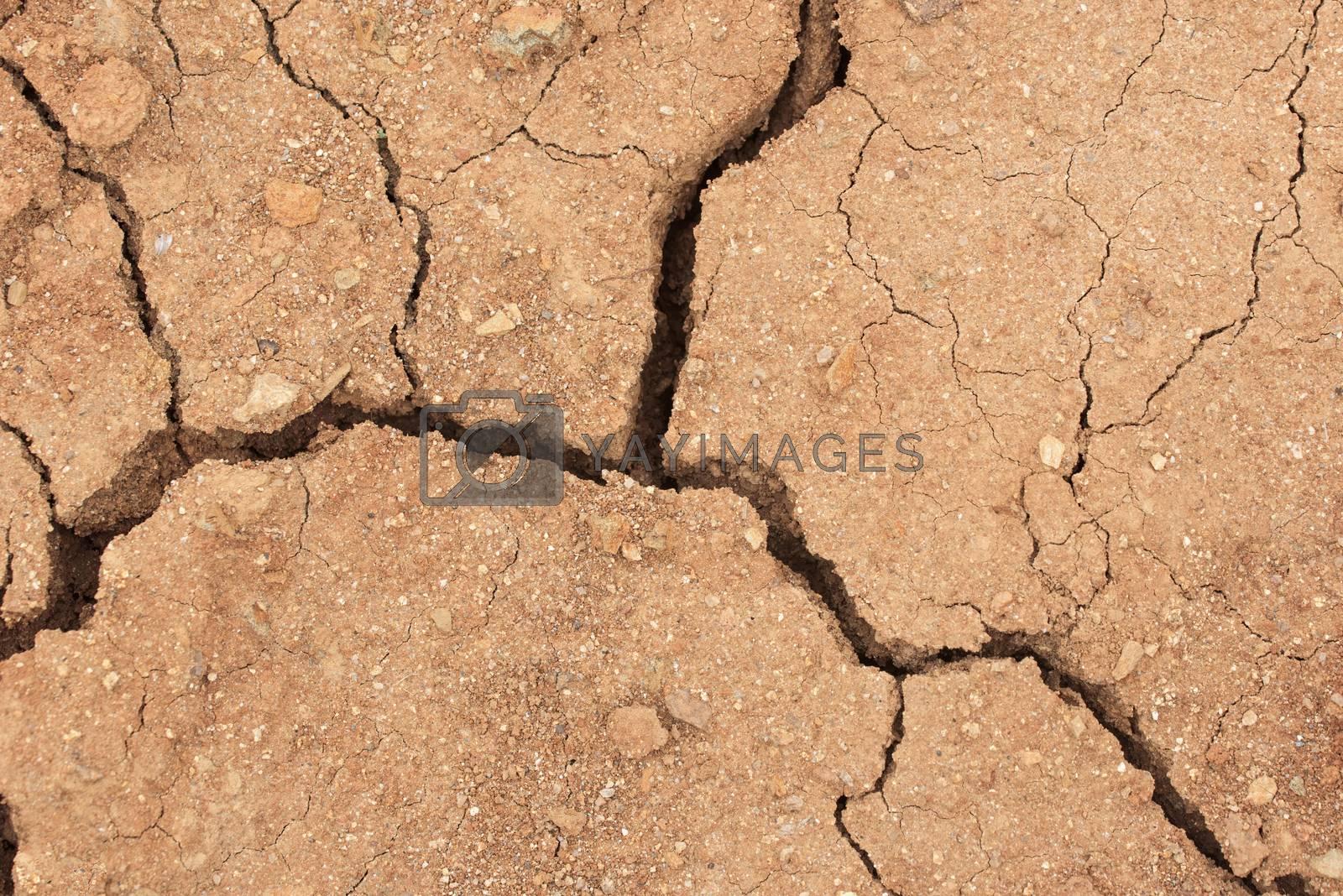 Dry land with cracks. Cracked earth in dry desert