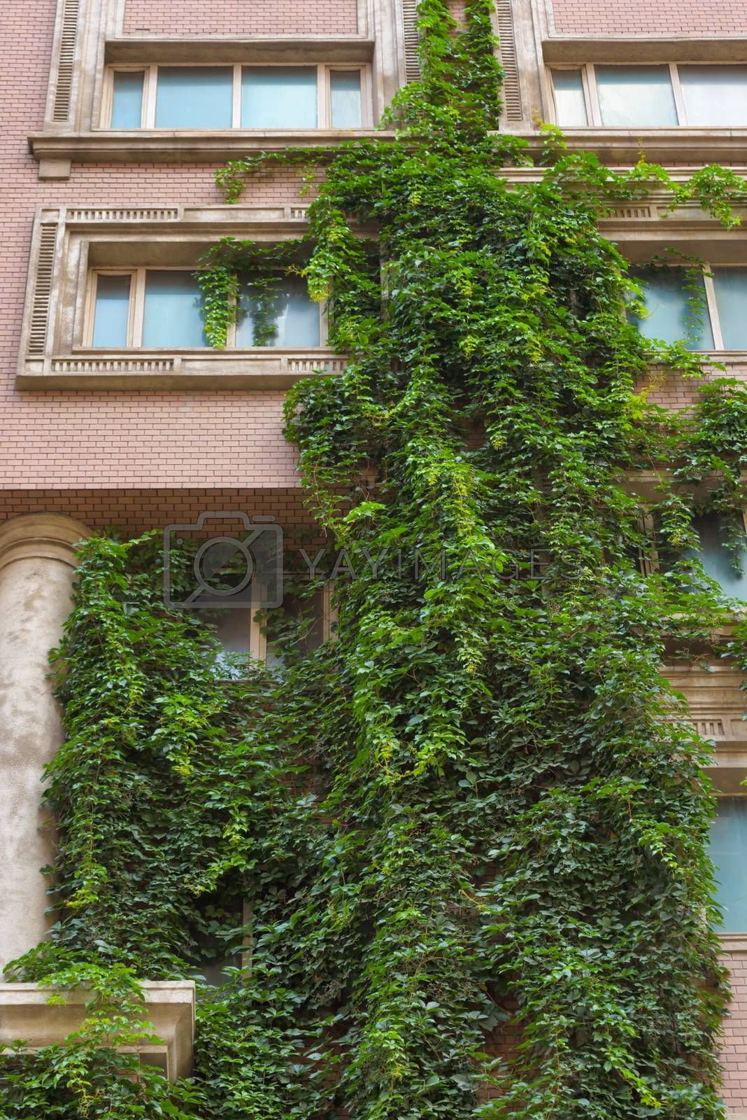 Green building with plants growing on the facade. Green living wall