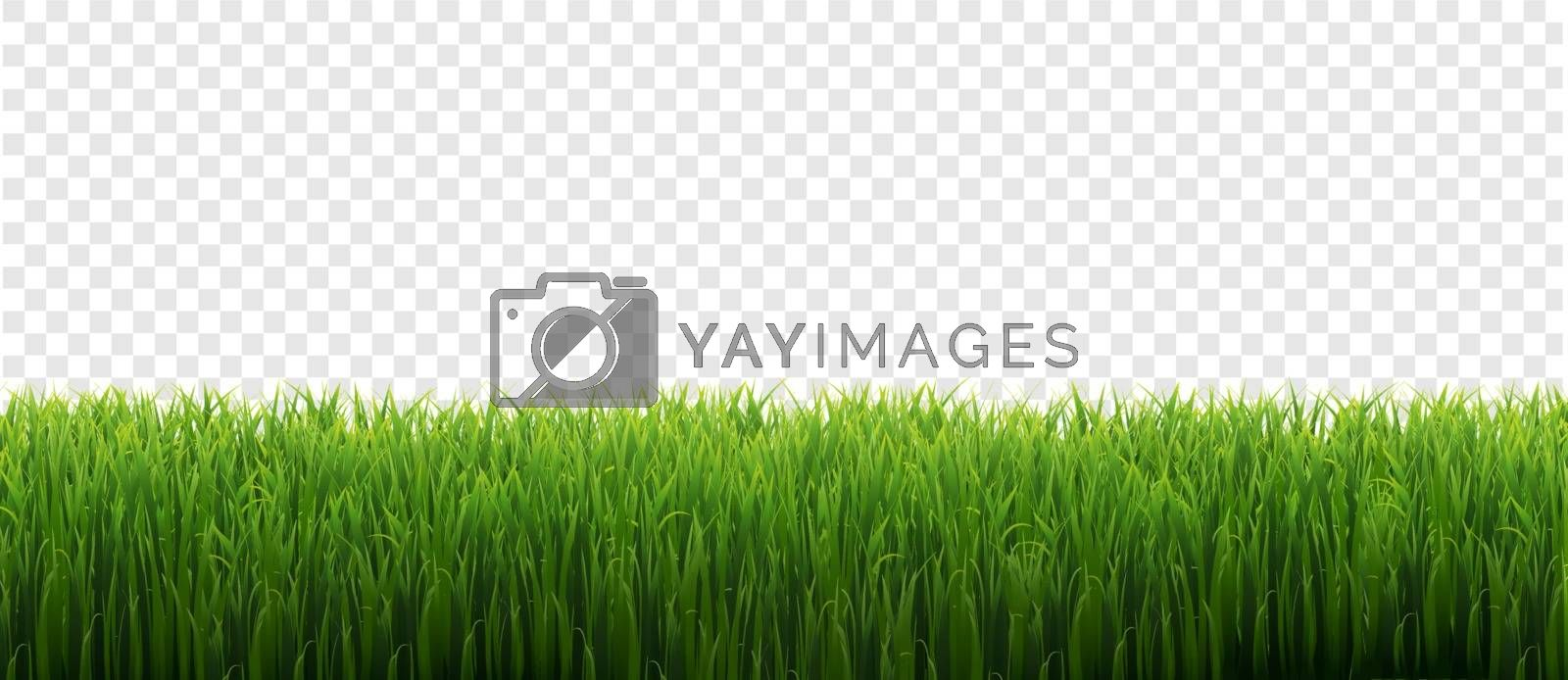 Green Grass Frame Isolated With Transparent Background, Vector Illustration