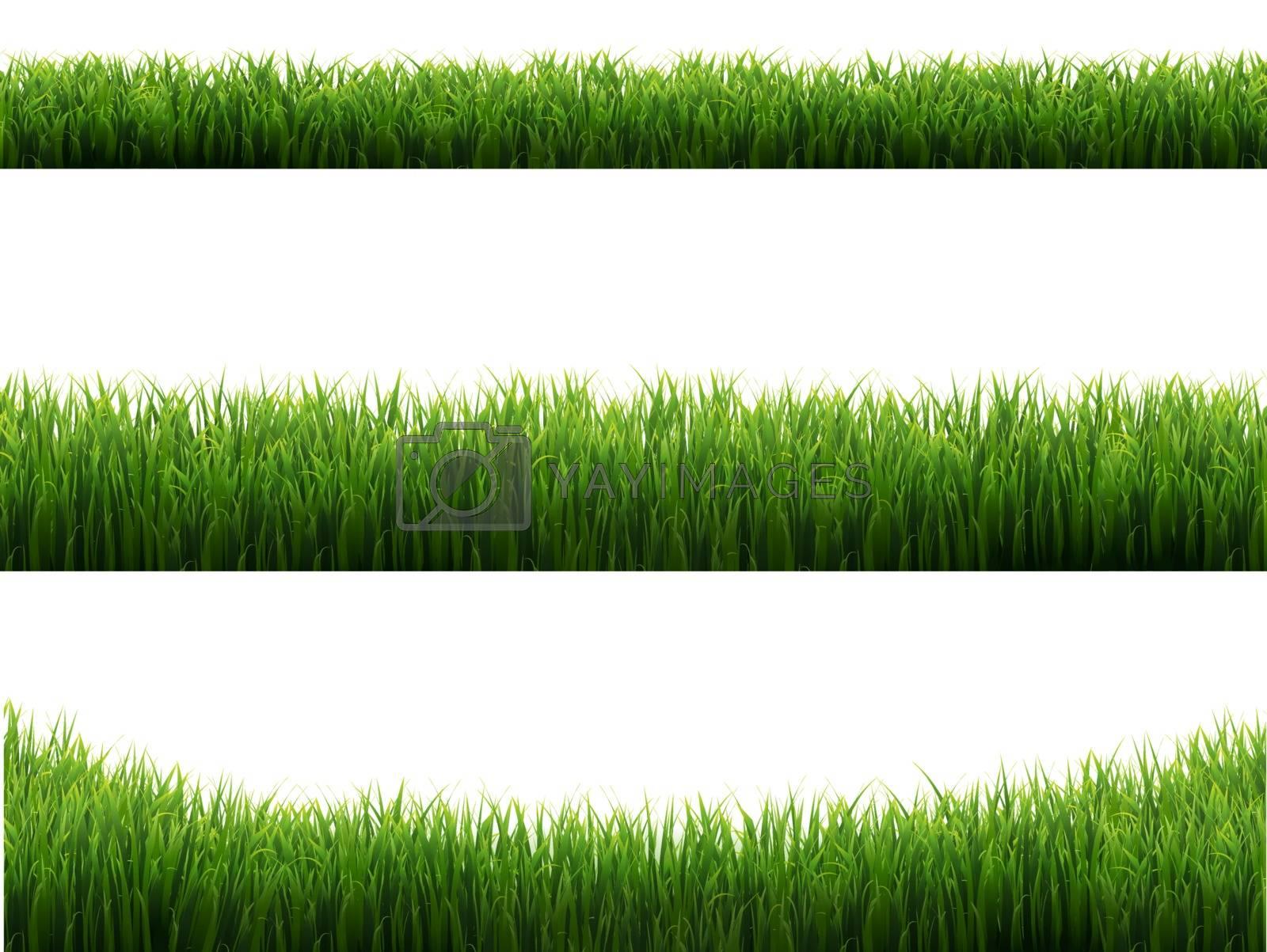 Green Grass Frames Set Transparent Background, Vector Illustration