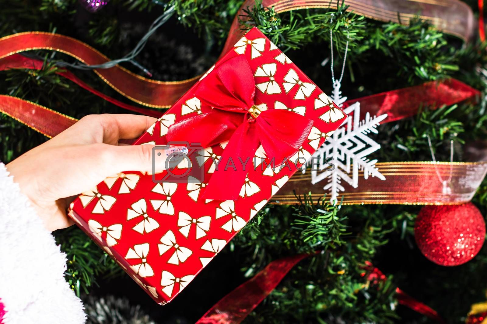 Hand holding present gift box in front of the Chhristmas tree.