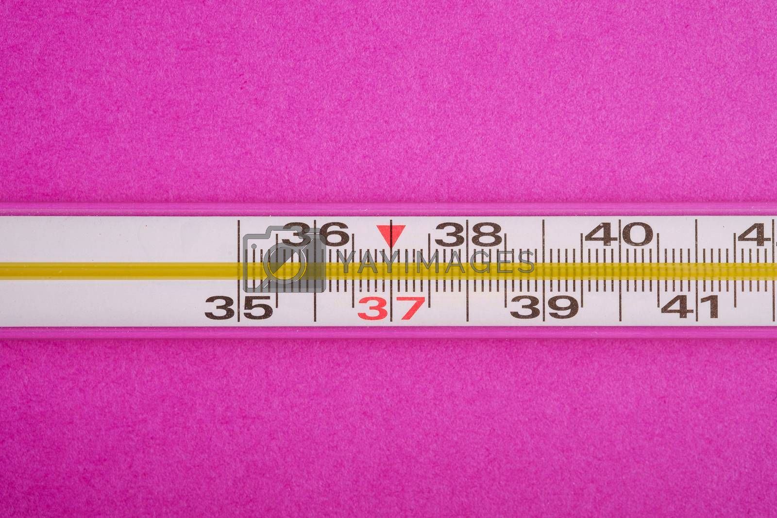 Analog thermometer on pink purple background, healthcare medical concept, antibiotics and cure, top view macro