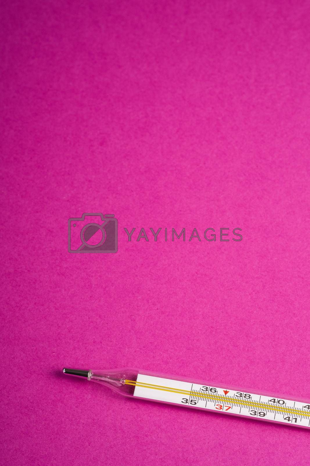 Analog thermometer on pink purple background, healthcare medical concept, antibiotics and cure, angle view copy space