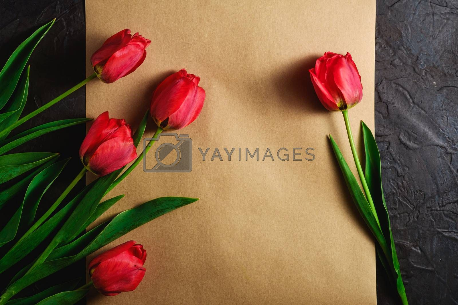 Bunch of red tulip flowers on textured brown paper on dark black background, top view copy space