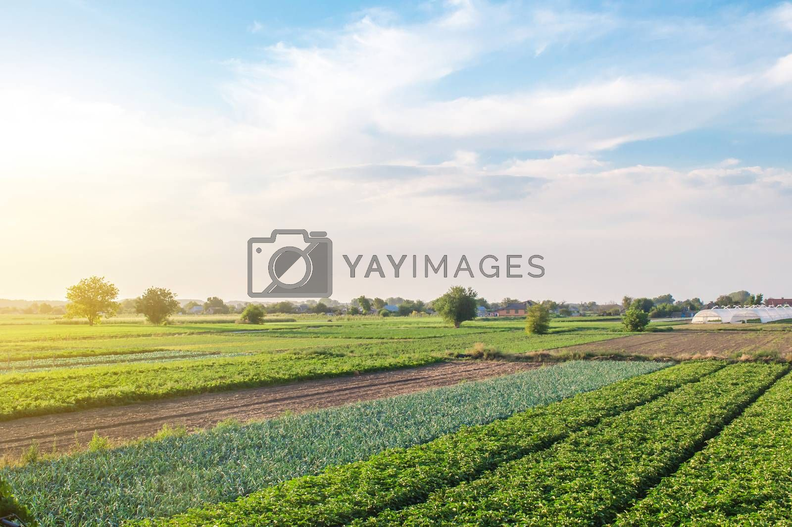 Wonderful european summer countryside landscape of farm fields. Agroindustry and agribusiness. Aerial view of a beautiful countryside farmland. Man-made cultivated environment. Organic farming