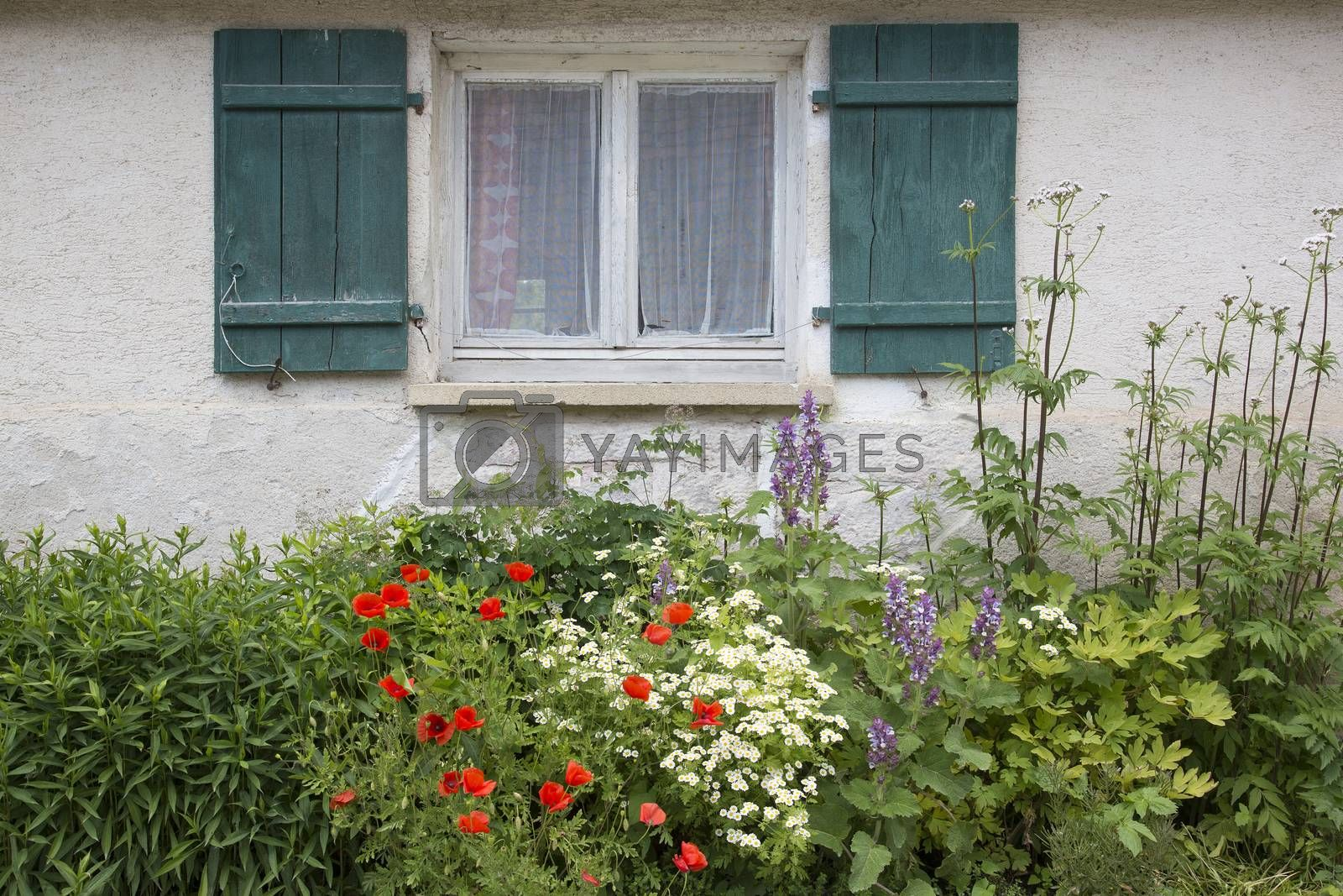 Royalty free image of Old window with wooden shutters and a flower bed front garden with poppies by Kasparart