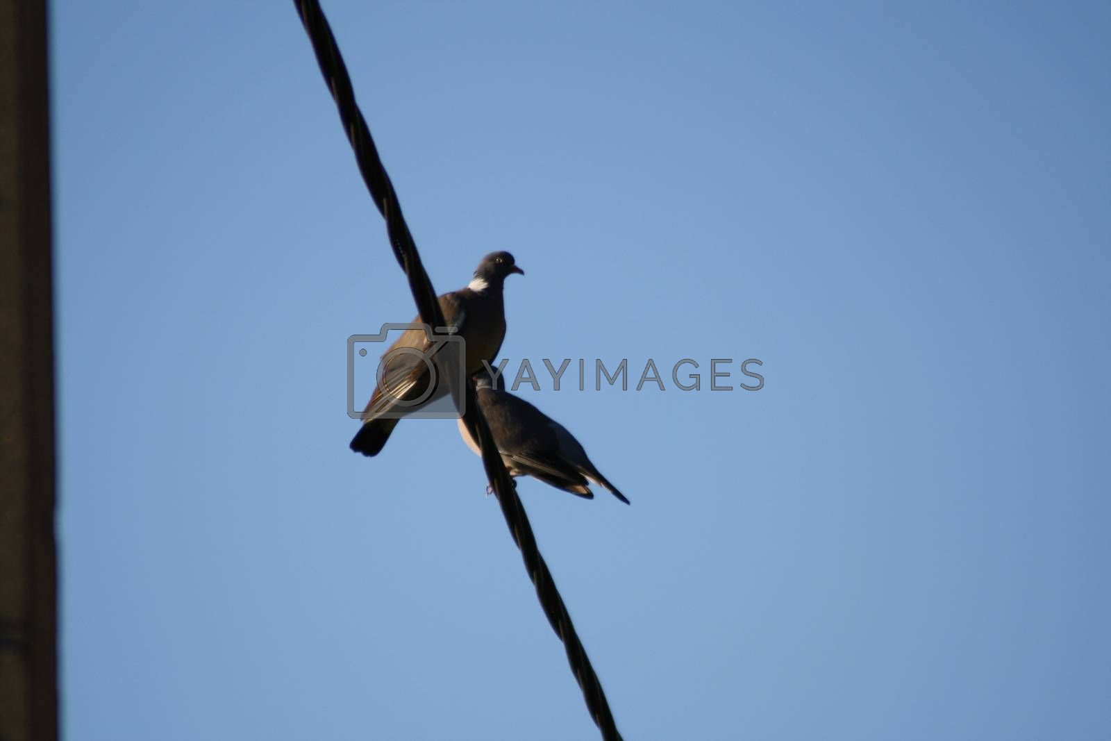 Royalty free image of A birds perched on top of a pole by balage941