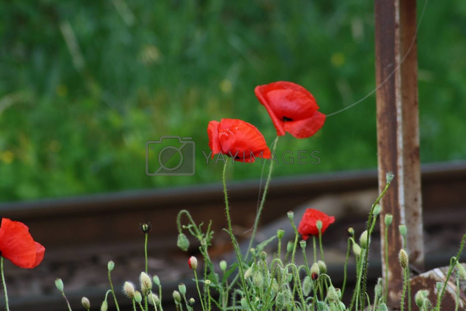 Royalty free image of A close up of a flower garden by balage941