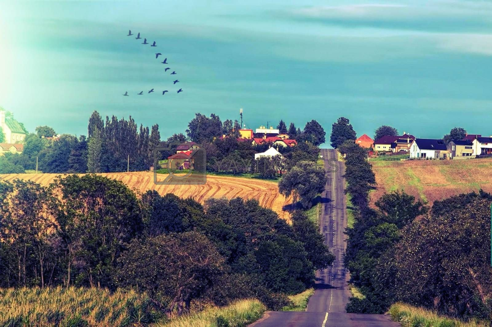 Royalty free image of It seems endless road with the houses in the back and the birds by balage941