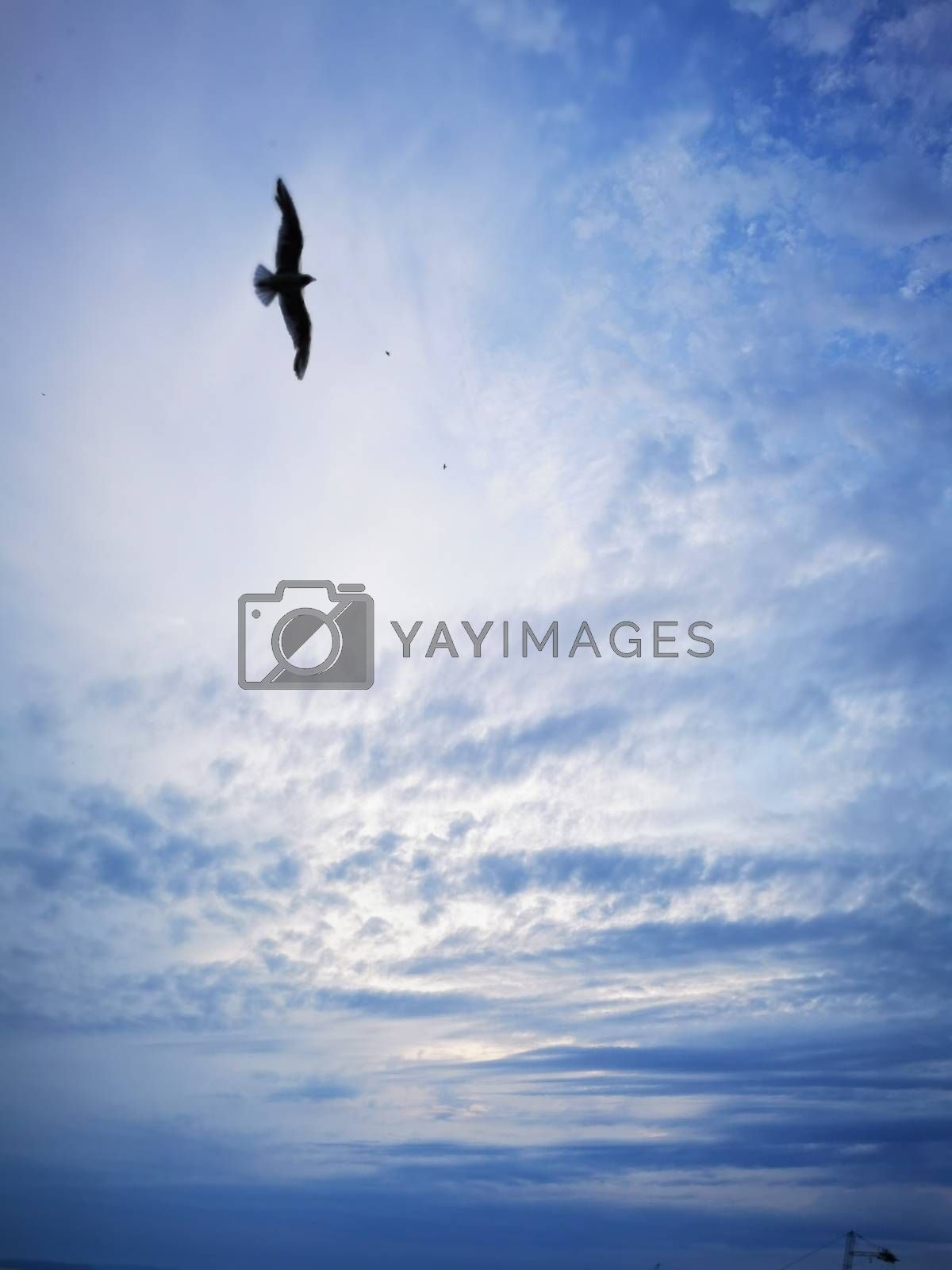 Royalty free image of Seagull flies on lake Balaton beach on a summer evening by balage941