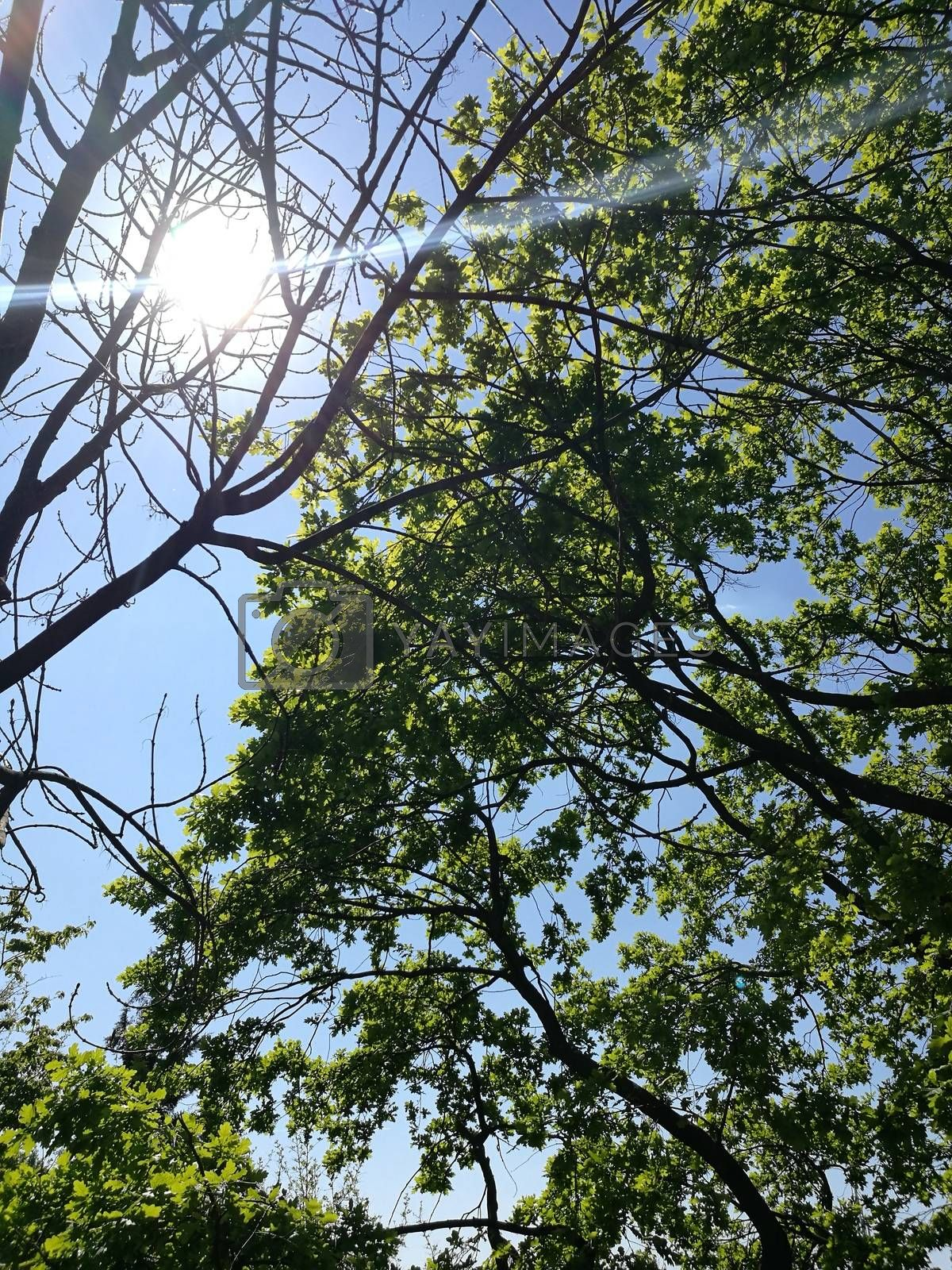 Royalty free image of Sunshine through the trees at the Budapest Arboretum by balage941