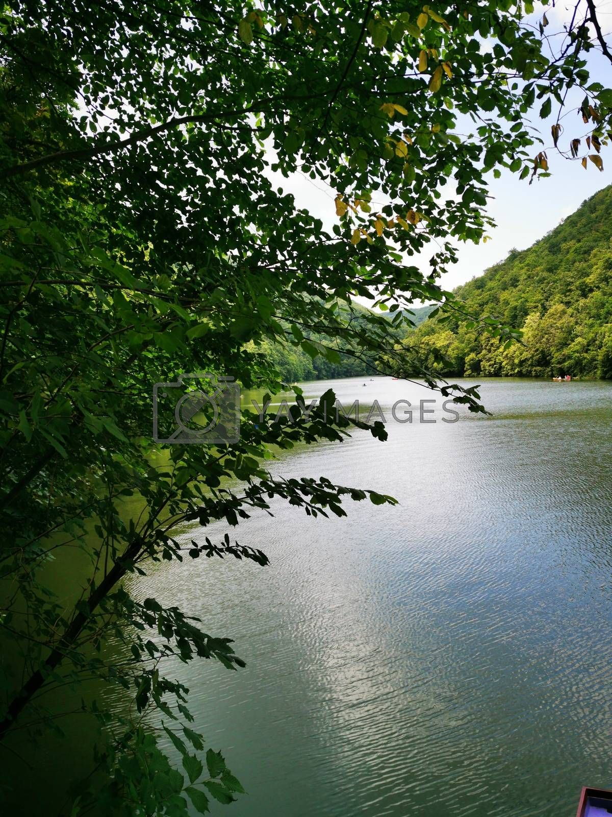 Royalty free image of A body of water surrounded by trees by balage941