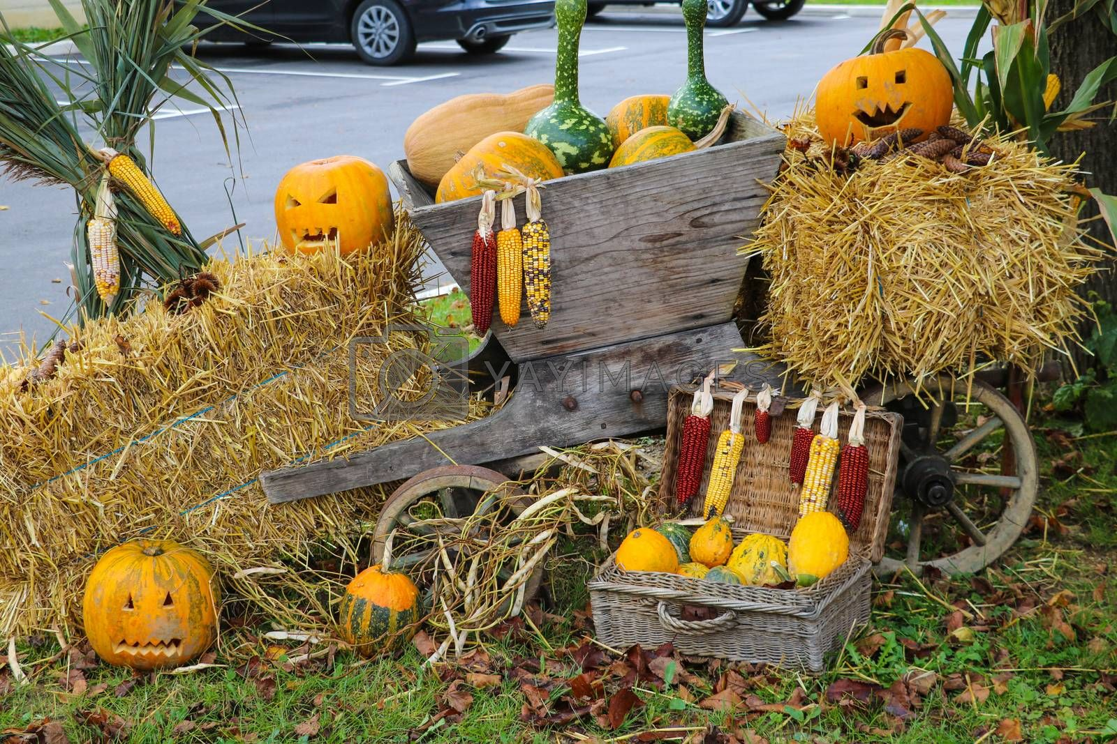 Royalty free image of Pumpkin on the grass with yellow leaves. Preparing for halloween. by kip02kas