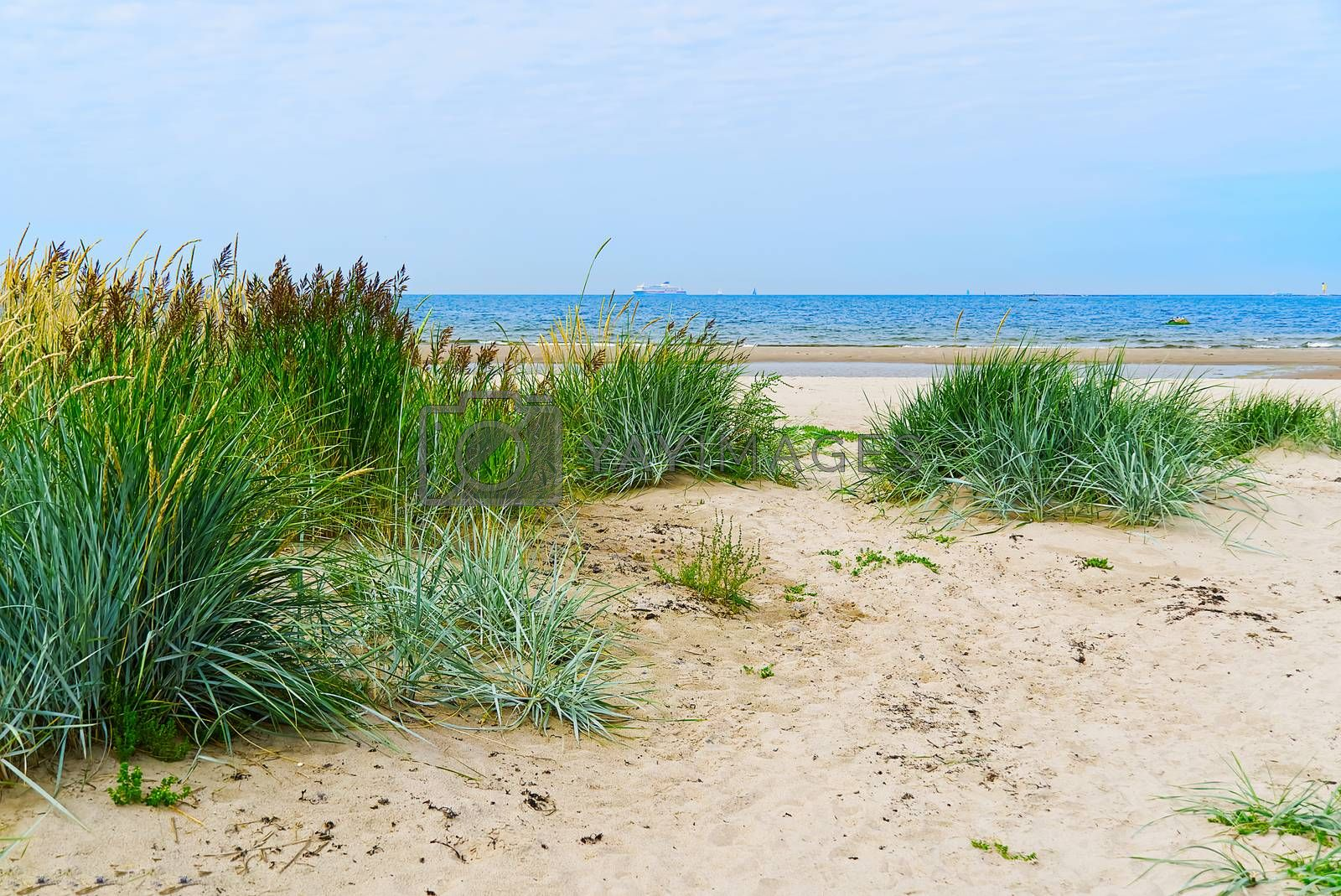 Royalty free image of Green reed lots of sand and blue sea. Beautiful sandy beach at Baltic Sea in Aegna island, Estonia.Grass straw on the beach in sunset. by PhotoTime