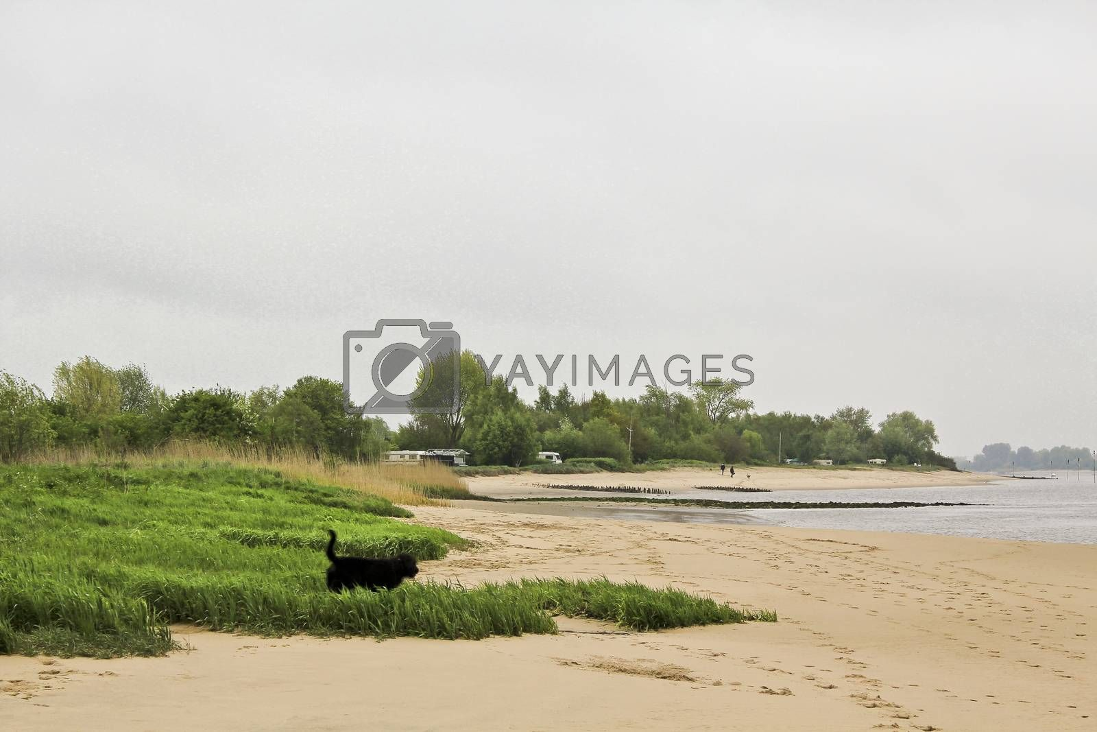 Royalty free image of Rough and cold Weser beach Brake Unterweser Lower Saxony Germany. by Arkadij
