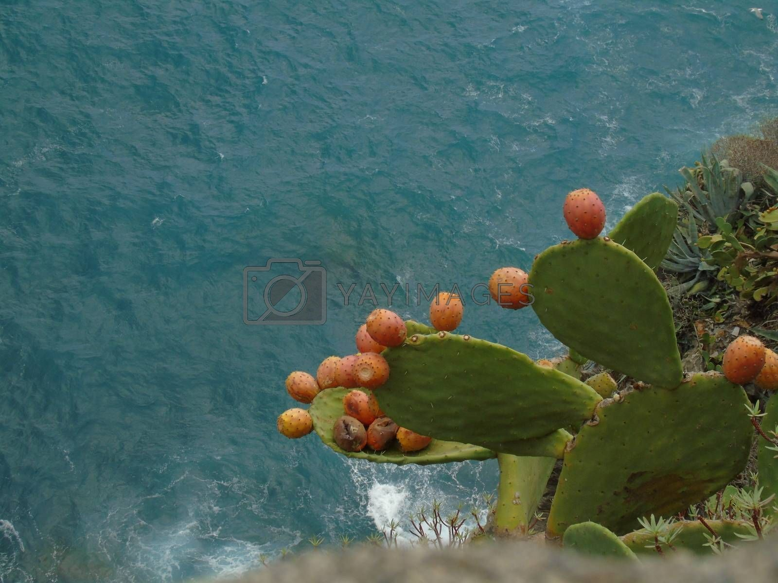 Royalty free image of Landscape from Cinque Terre by yohananegusse