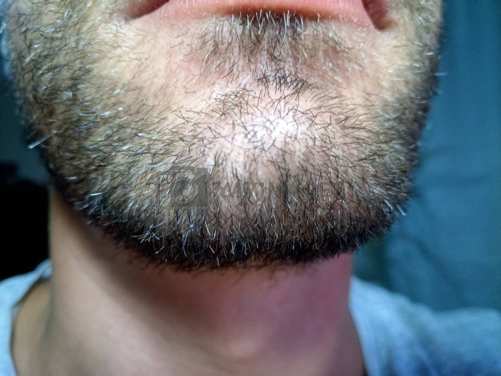 Royalty free image of Bearded young man, stubble near. Unshaven more than a week. by eleonimages