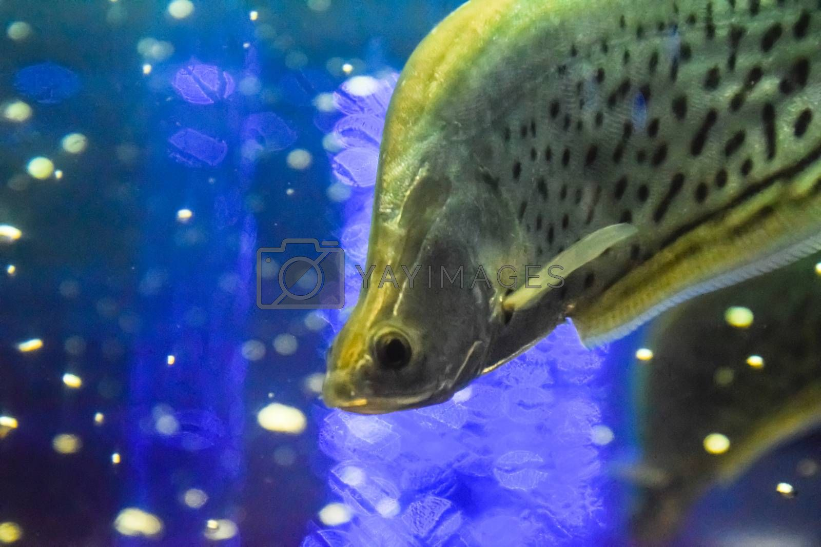 Fish in the aquarium of the aquarium,