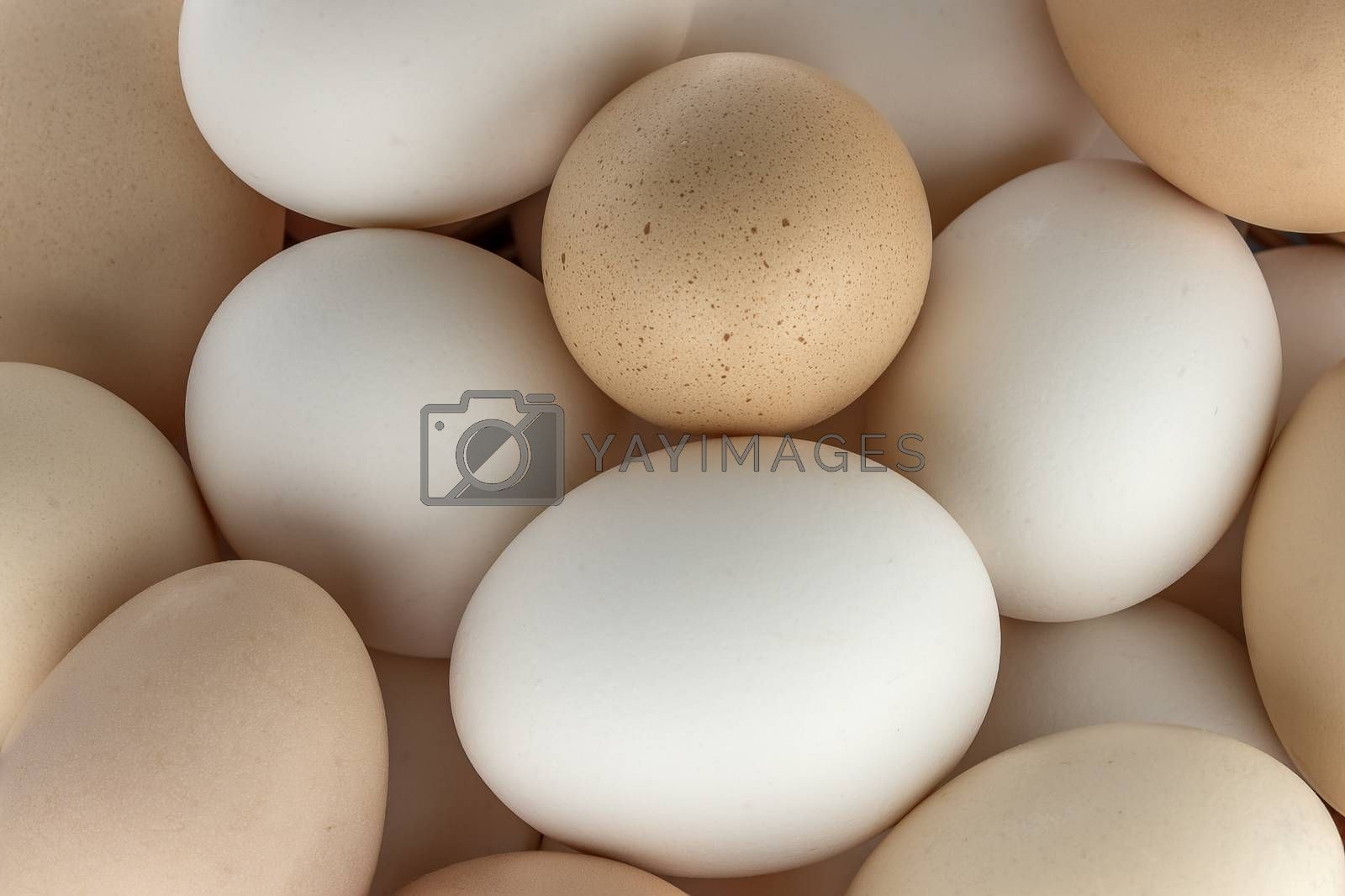 Small group of eggs of different colours