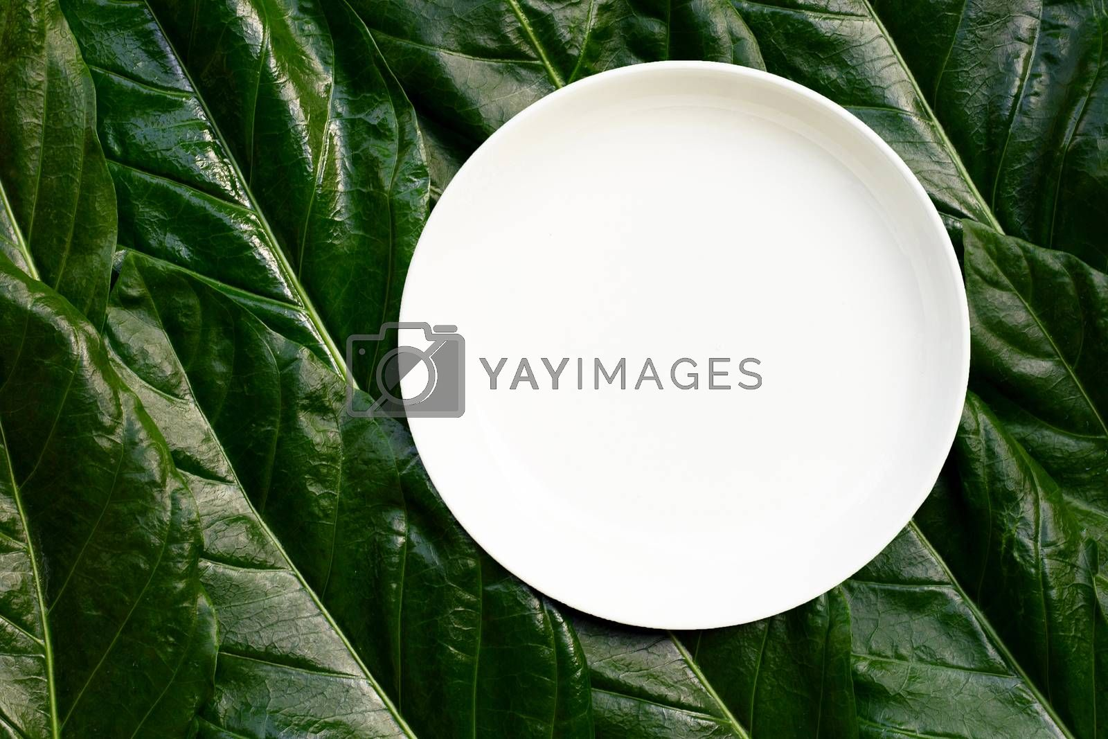 Empty white ceramic plate on Noni or Morinda Citrifolia leaves background. Top view
